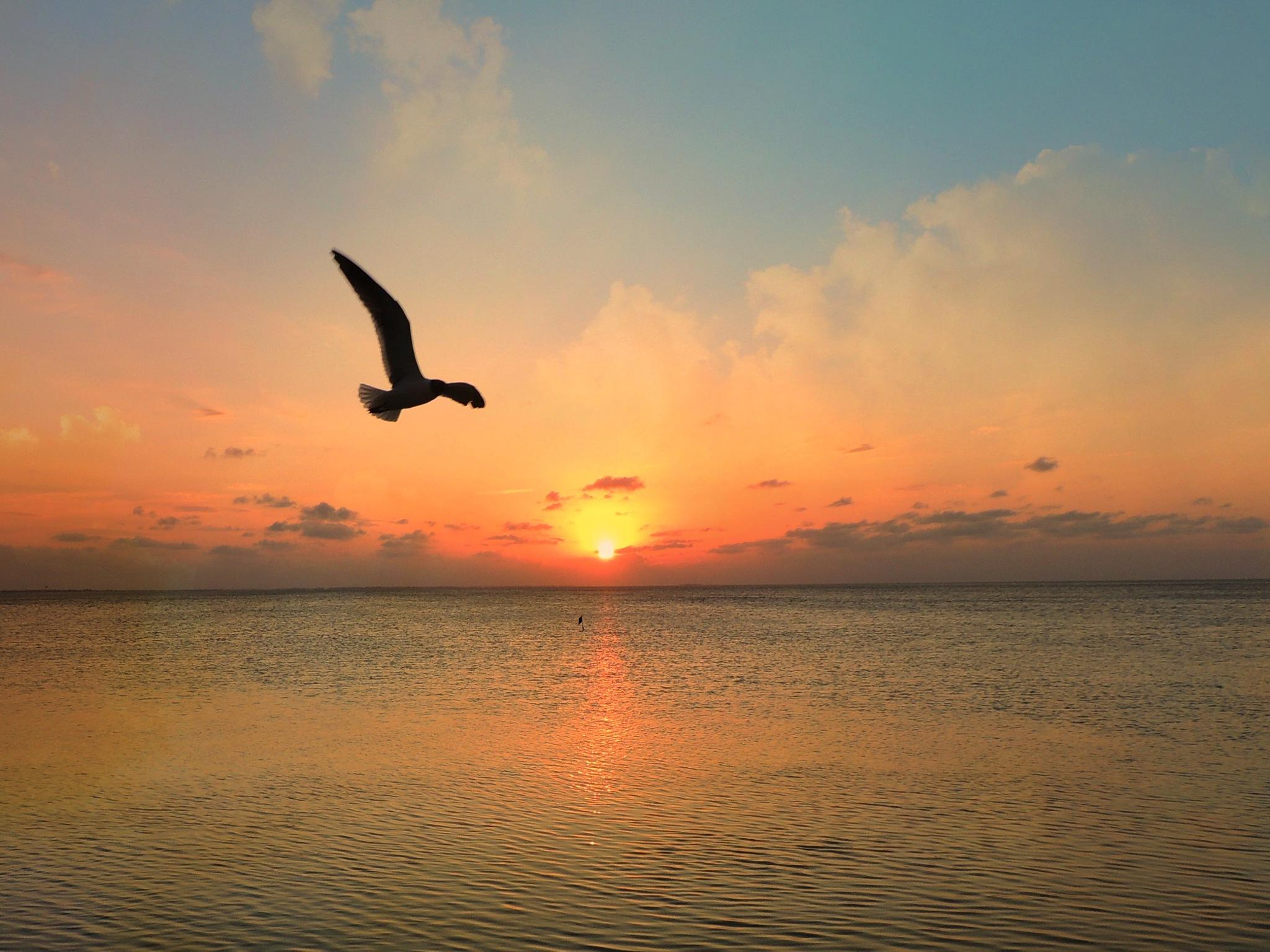 South Padre Sunset by treva.maye