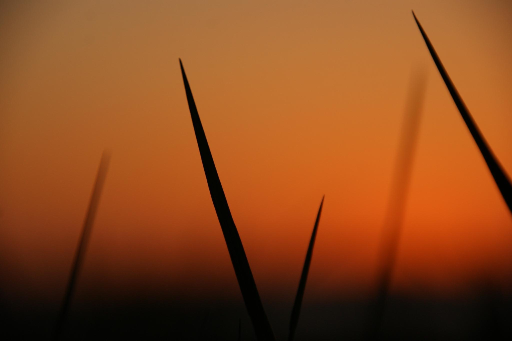 Stilhed før natte.. (Peace befor night) by tina.nielsen.16100