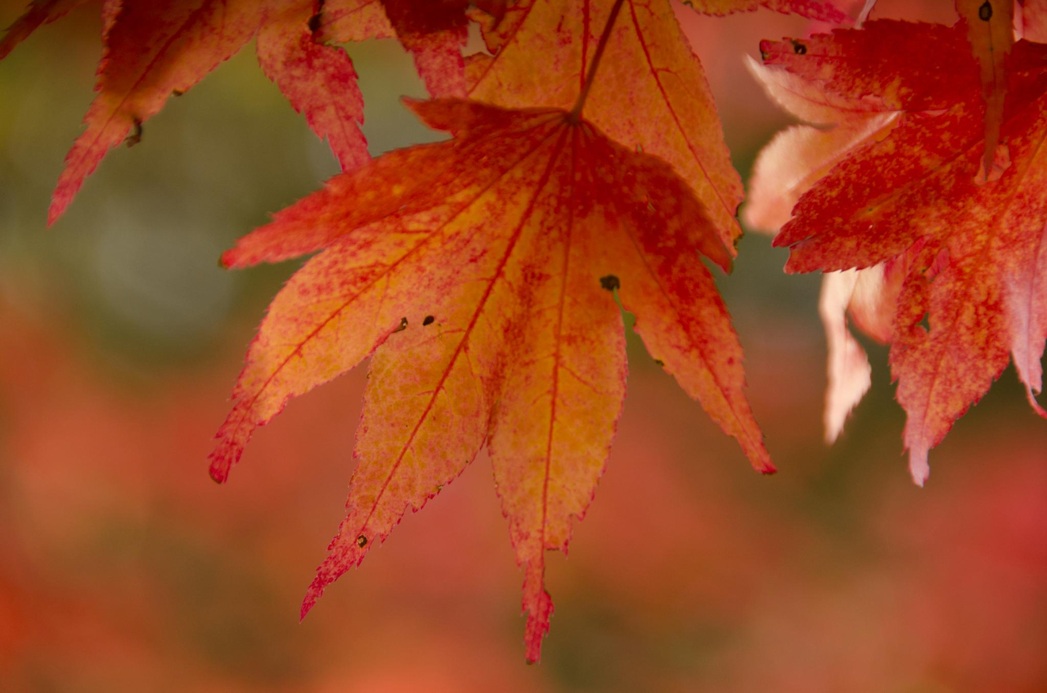 Autumn colour by gill.keville