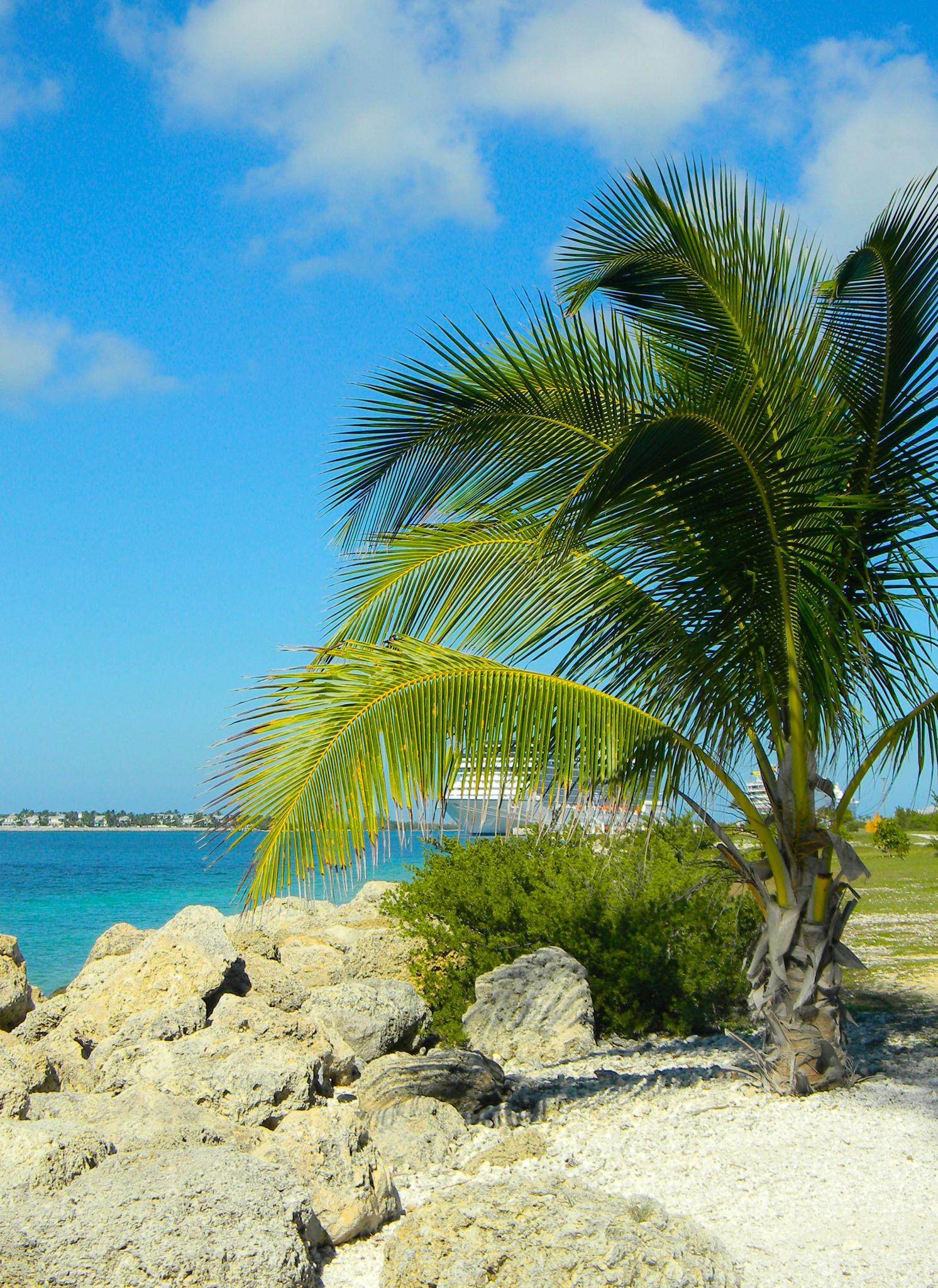 Summer Days at the Beach by Rhondasims