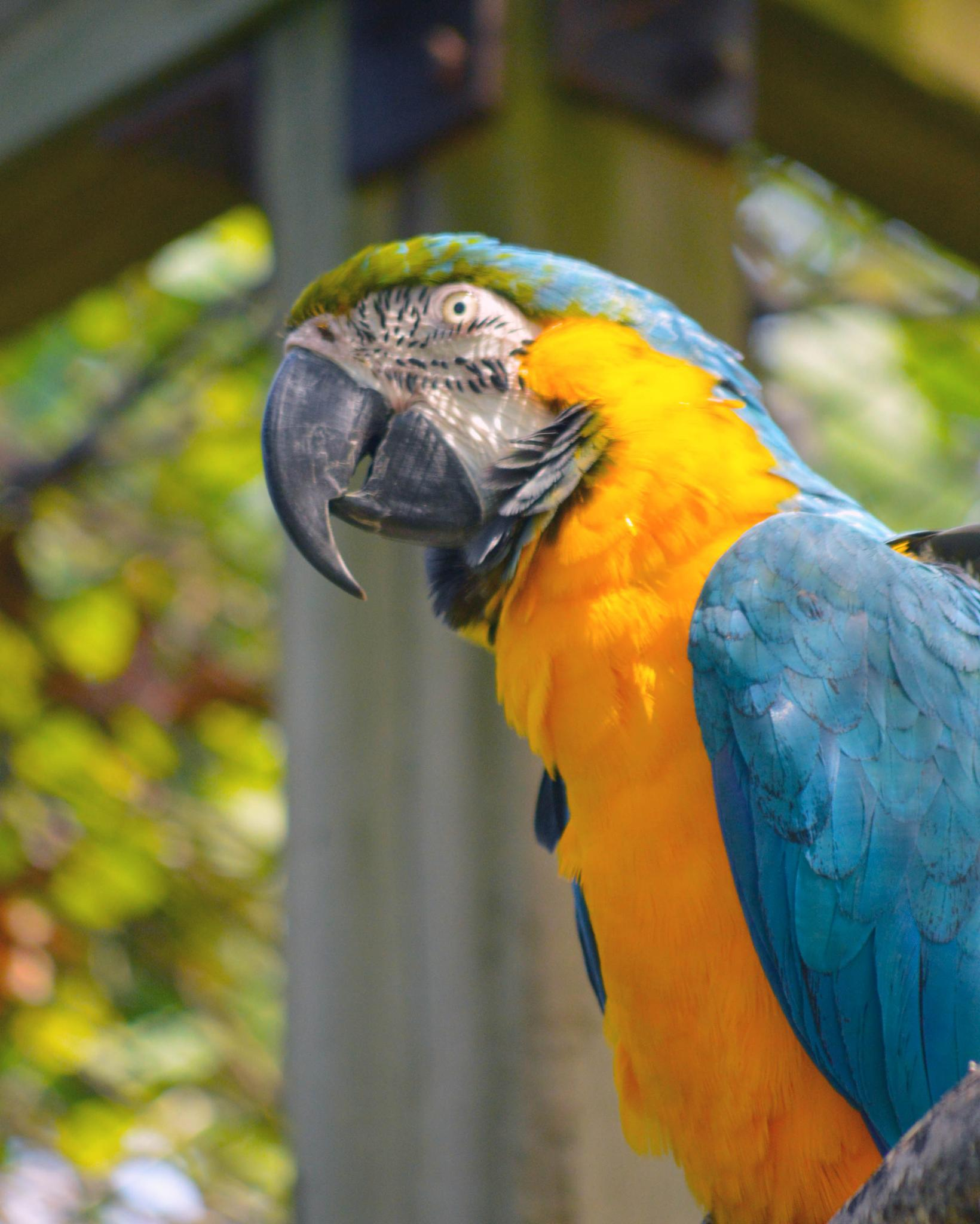 Parrot  by Rhondasims