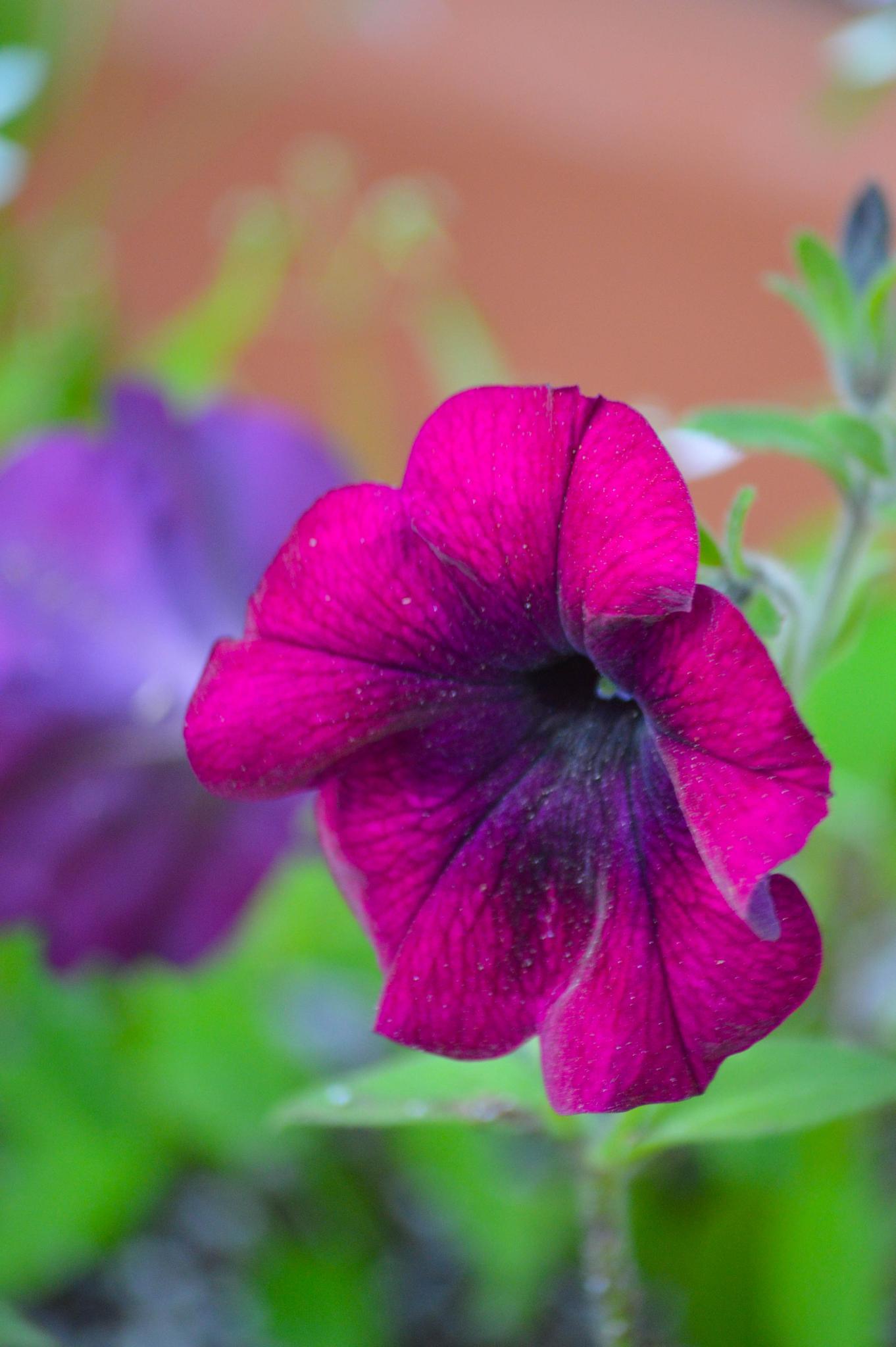 Wildflower  by Rhondasims