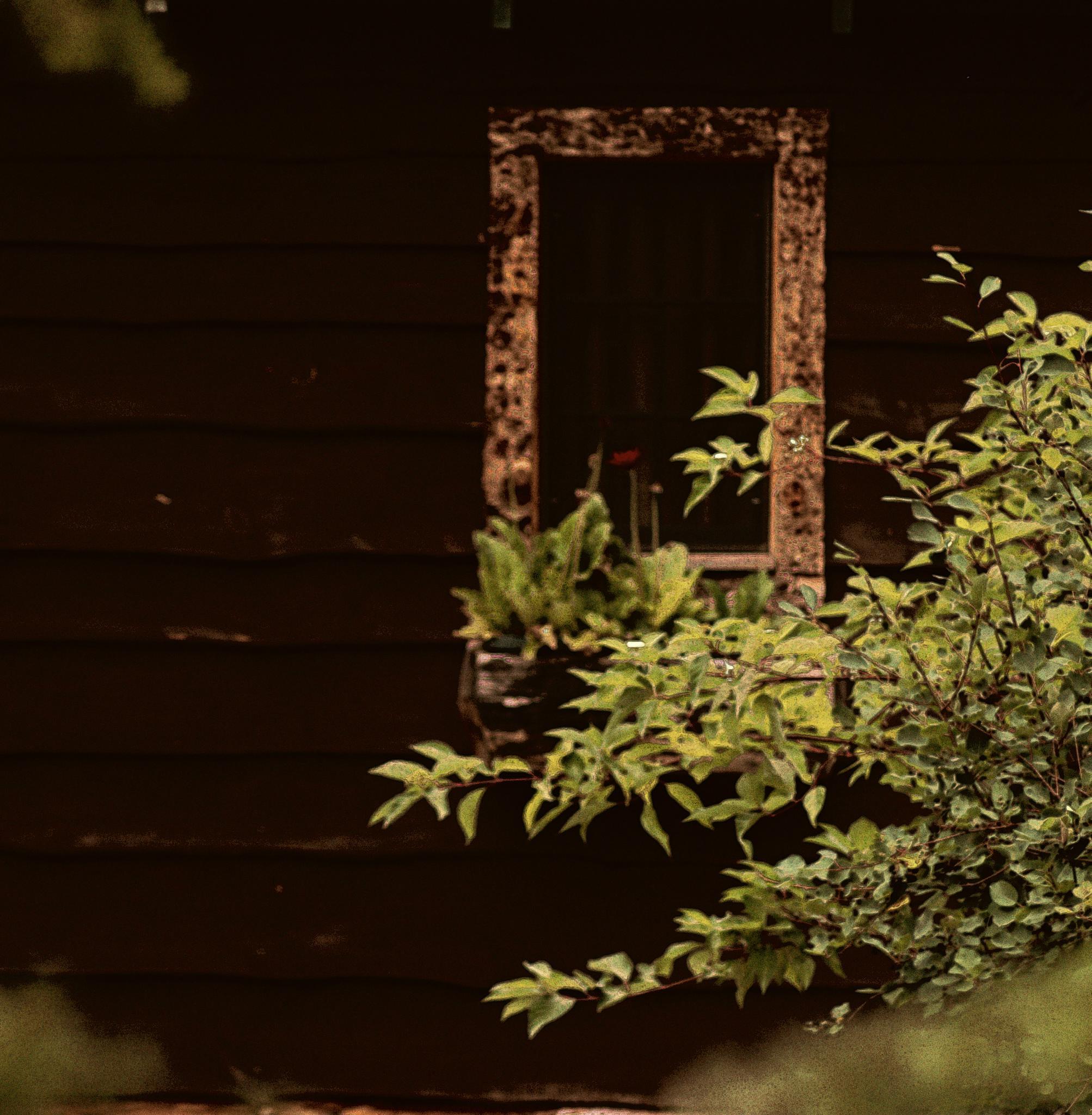 Window by Shannon Hanson
