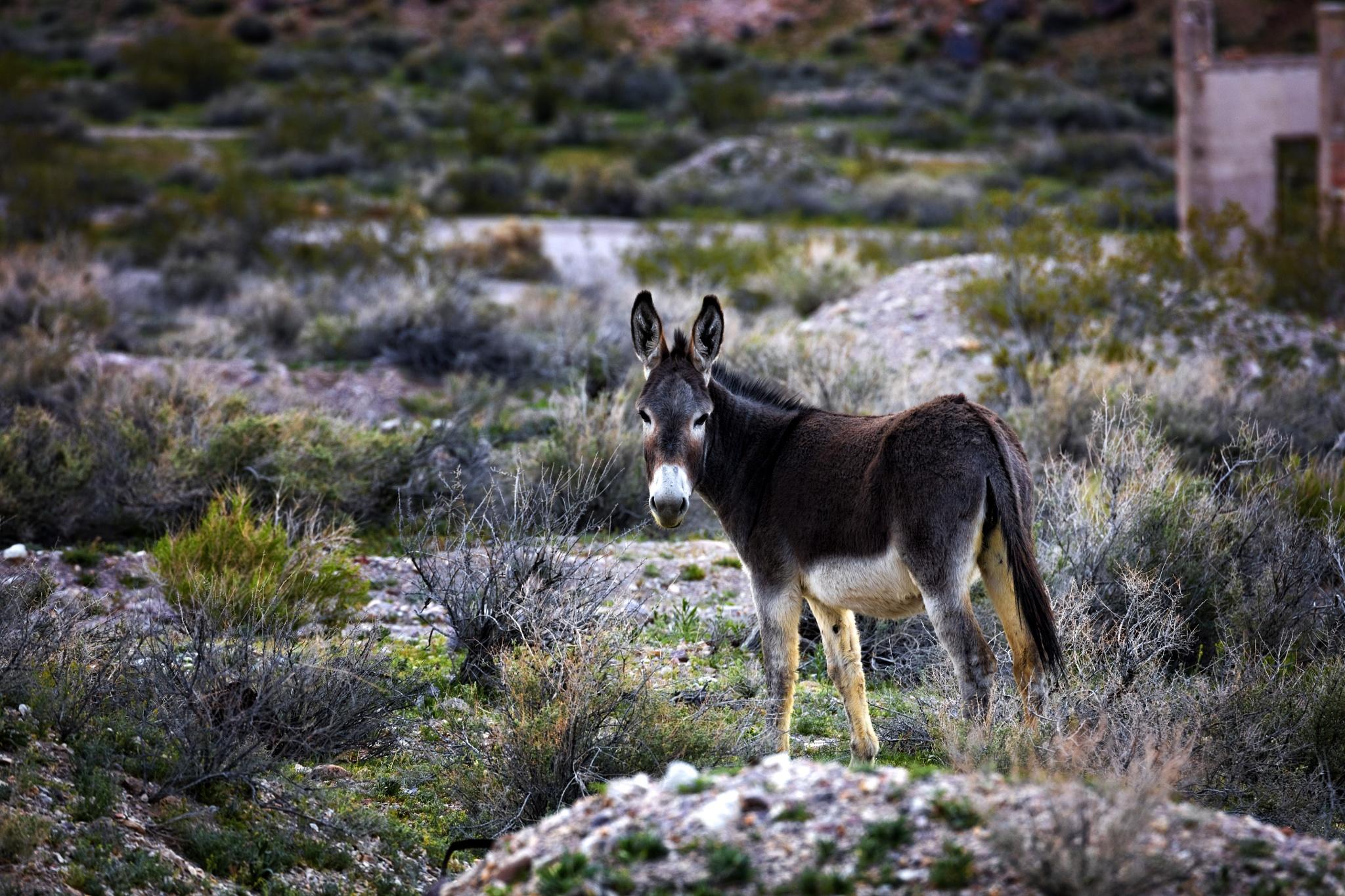 Photo in Animal #donkey #wildlife #animal #desert