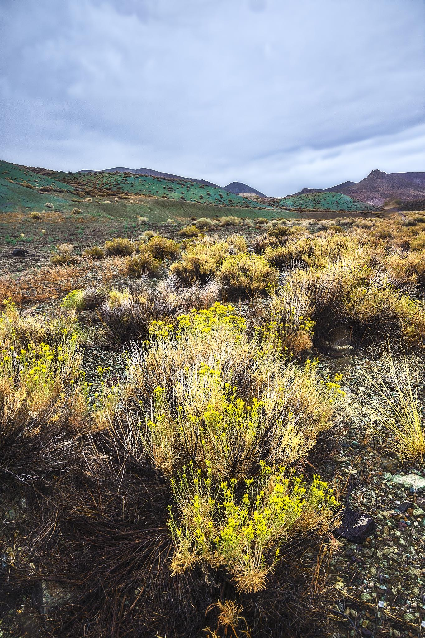 Northern Nevada by Ed Stilwell