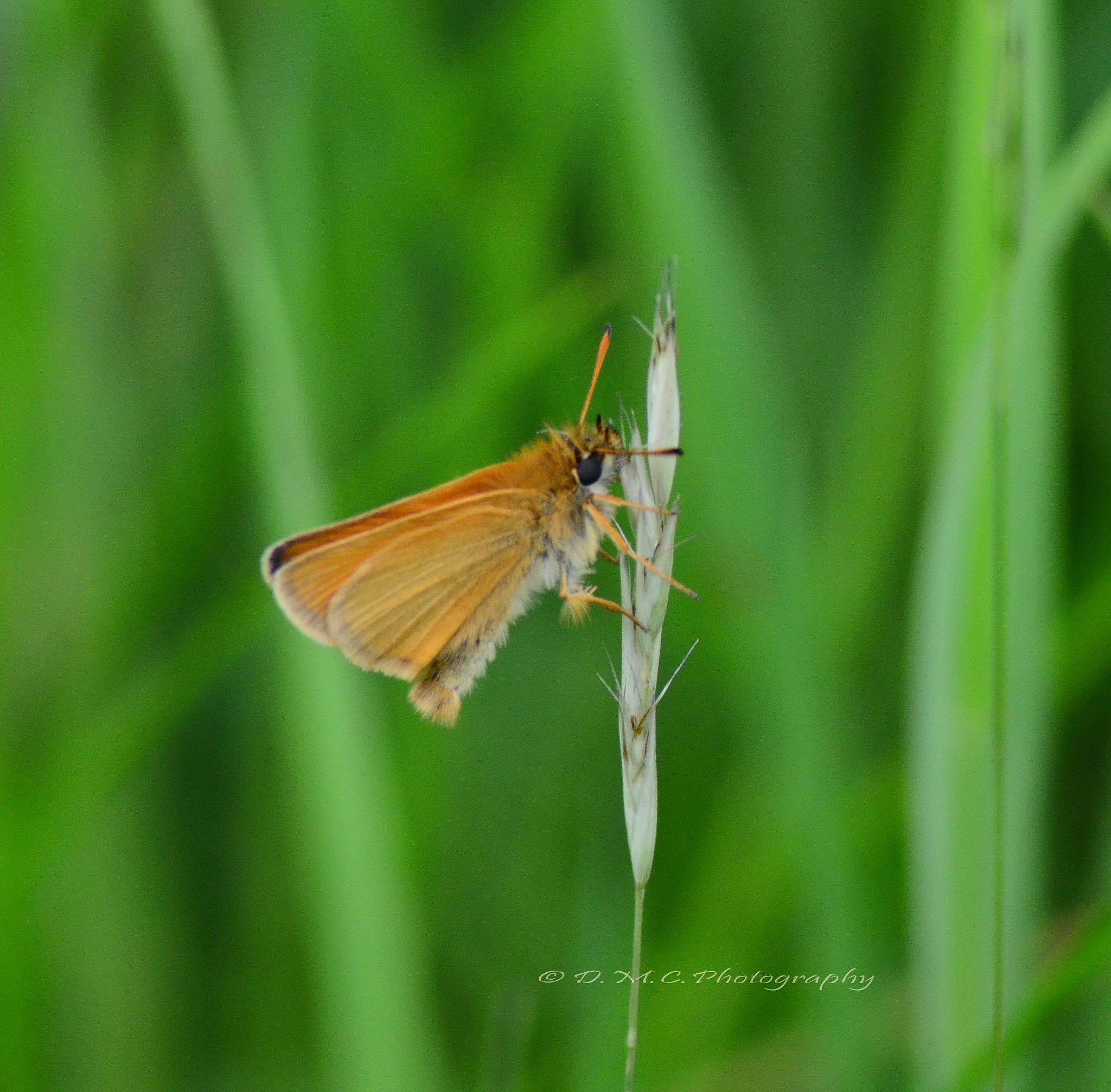 Moth by D M Camps Photography