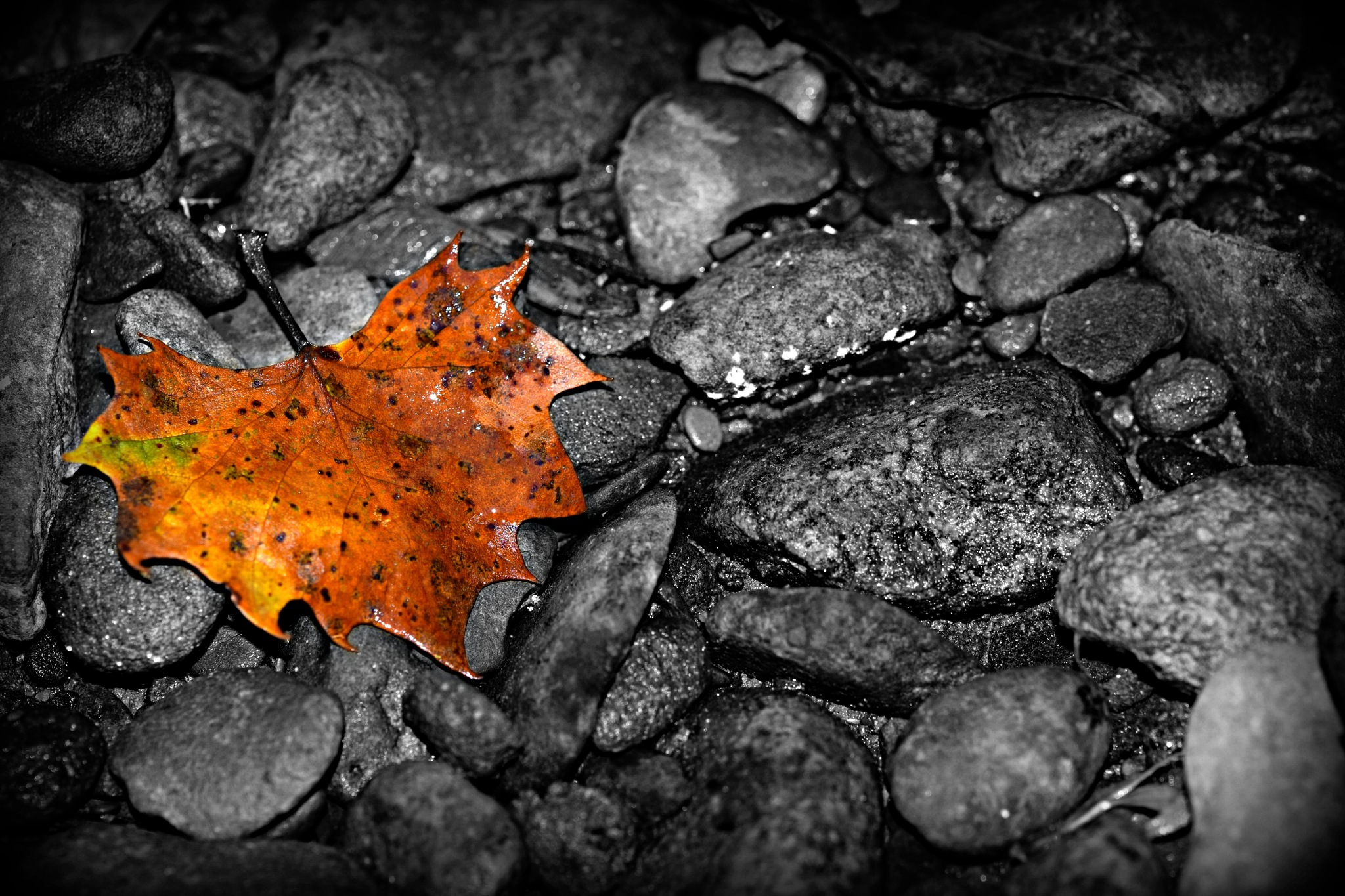 Touch of Fall by sandras.snapshots
