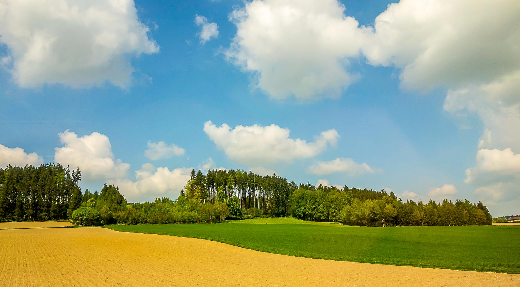 Fields, forest and puffy clouds by Malcolm