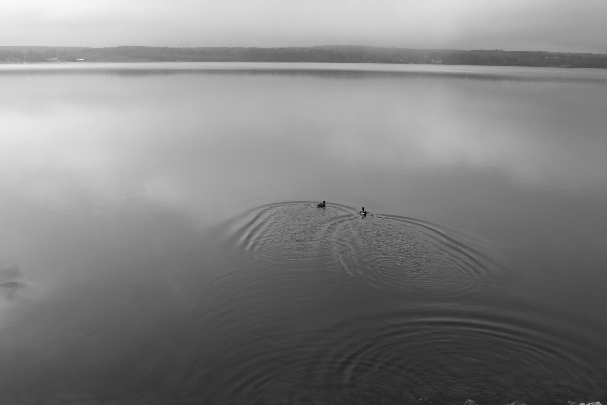 Quiet morning  by Sajeev