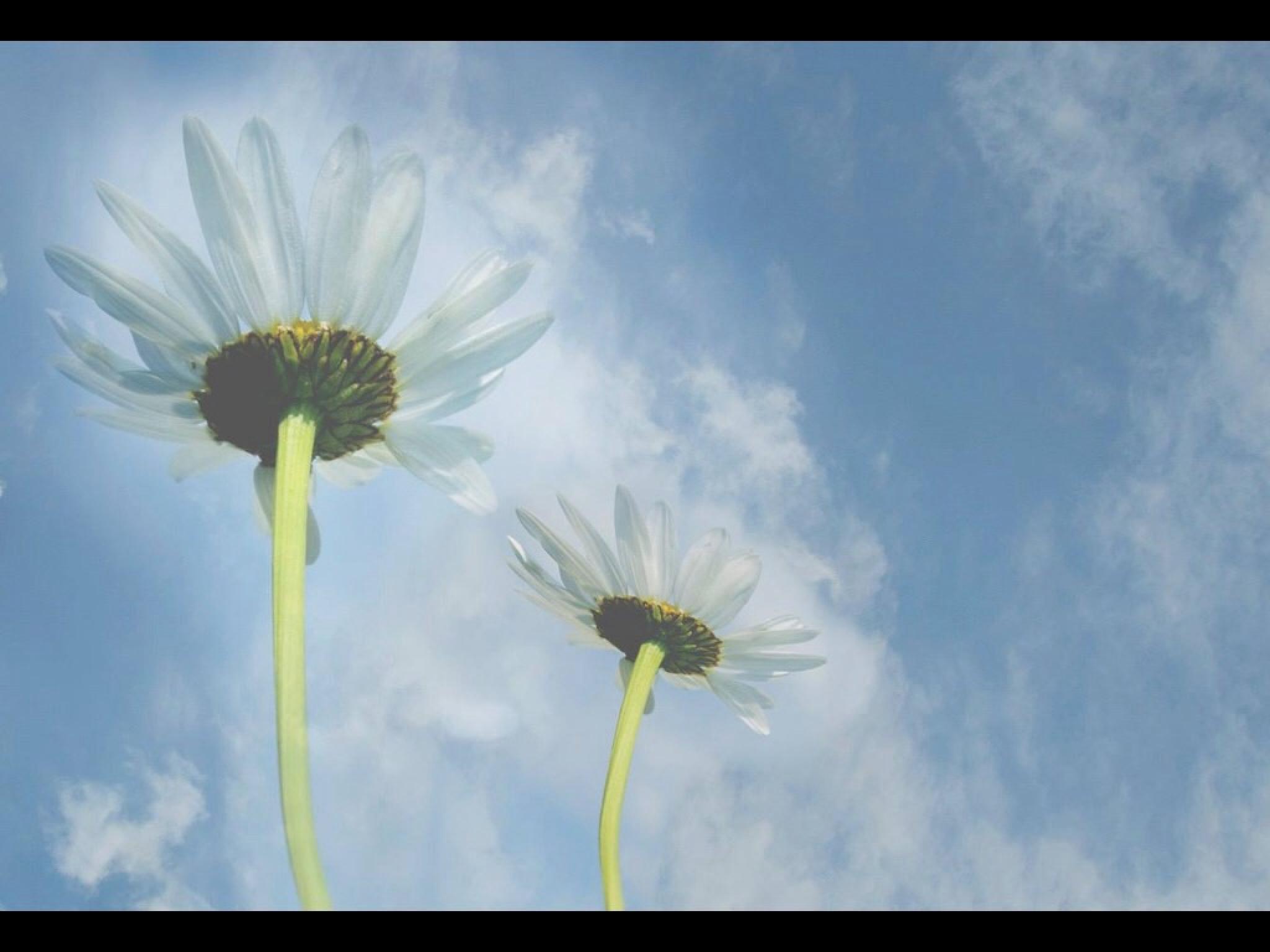 Daisy sky by Sheenama