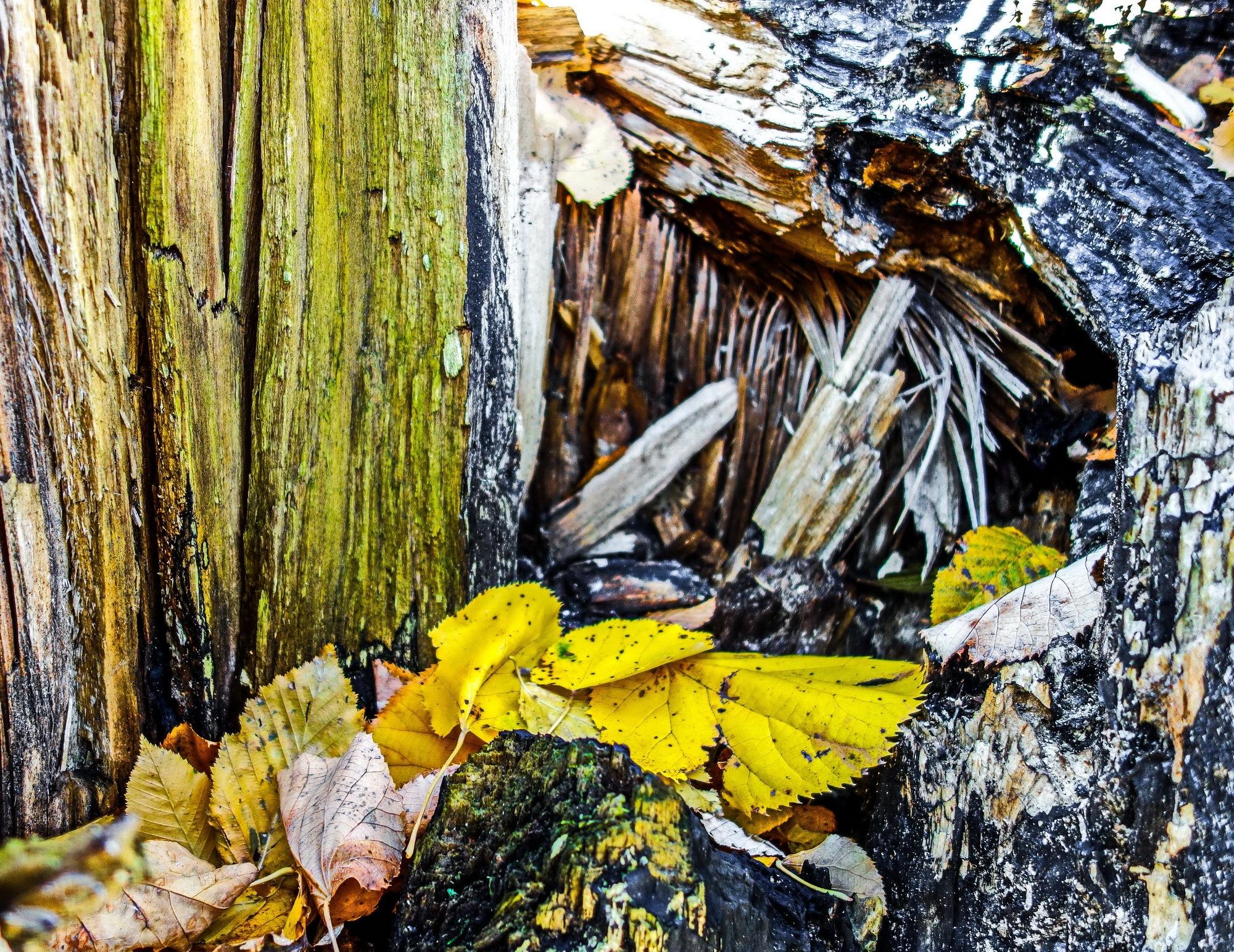 Abstract Nature  by EnacheArmandIustinian