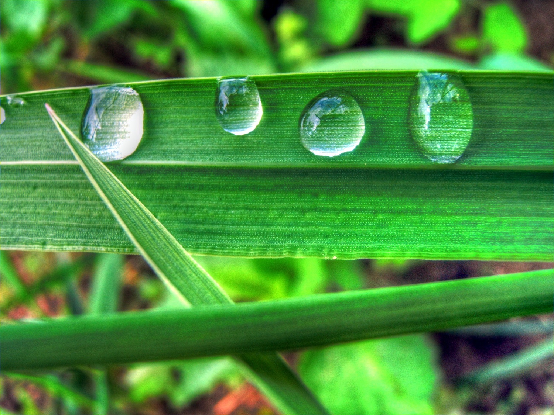 Green Drops  y by EnacheArmandIustinian