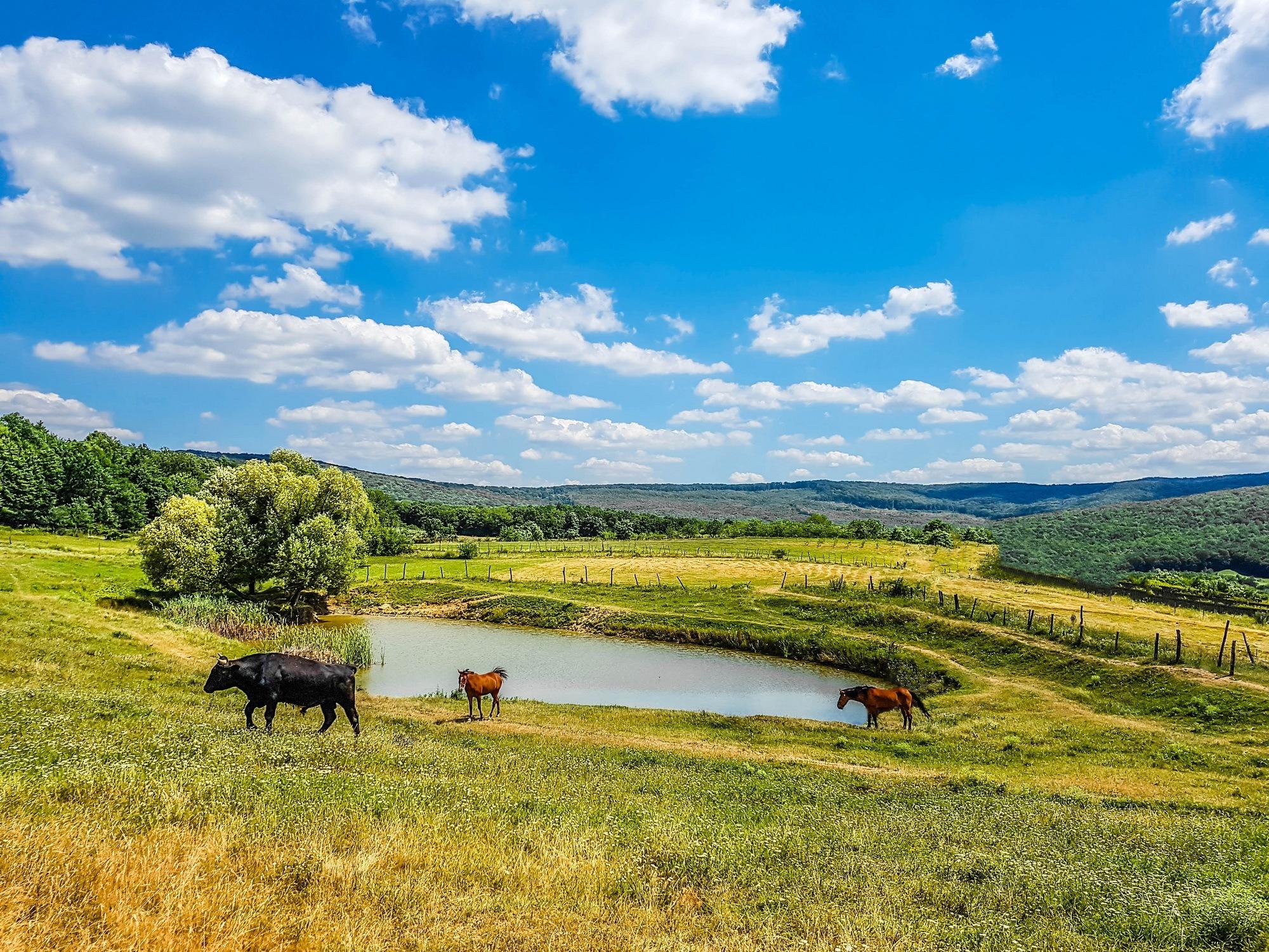 Bull, horses and the beautiful Barnova Place  by EnacheArmandIustinian