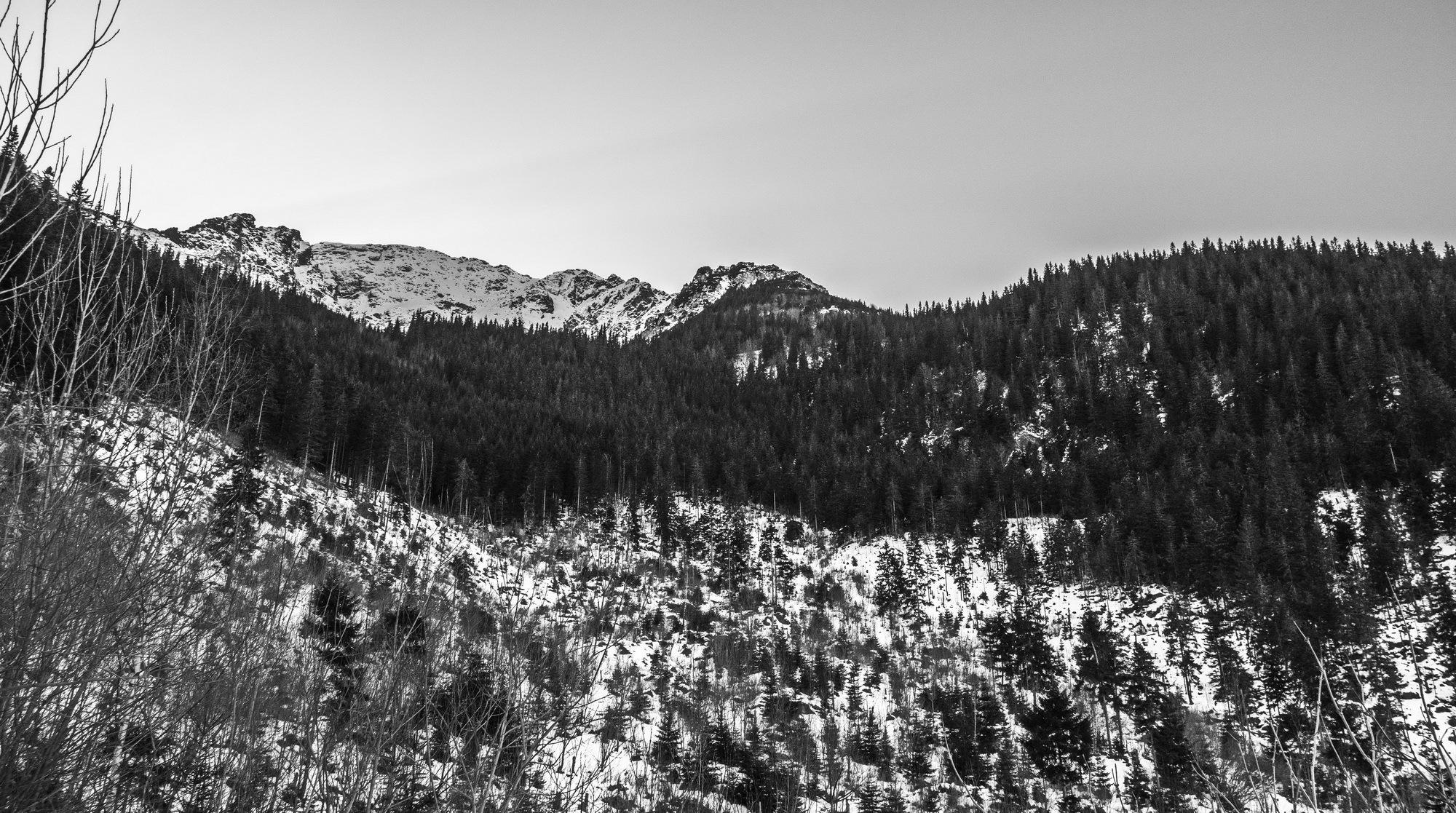 Peak Pietrosul Rodnei  by EnacheArmandIustinian