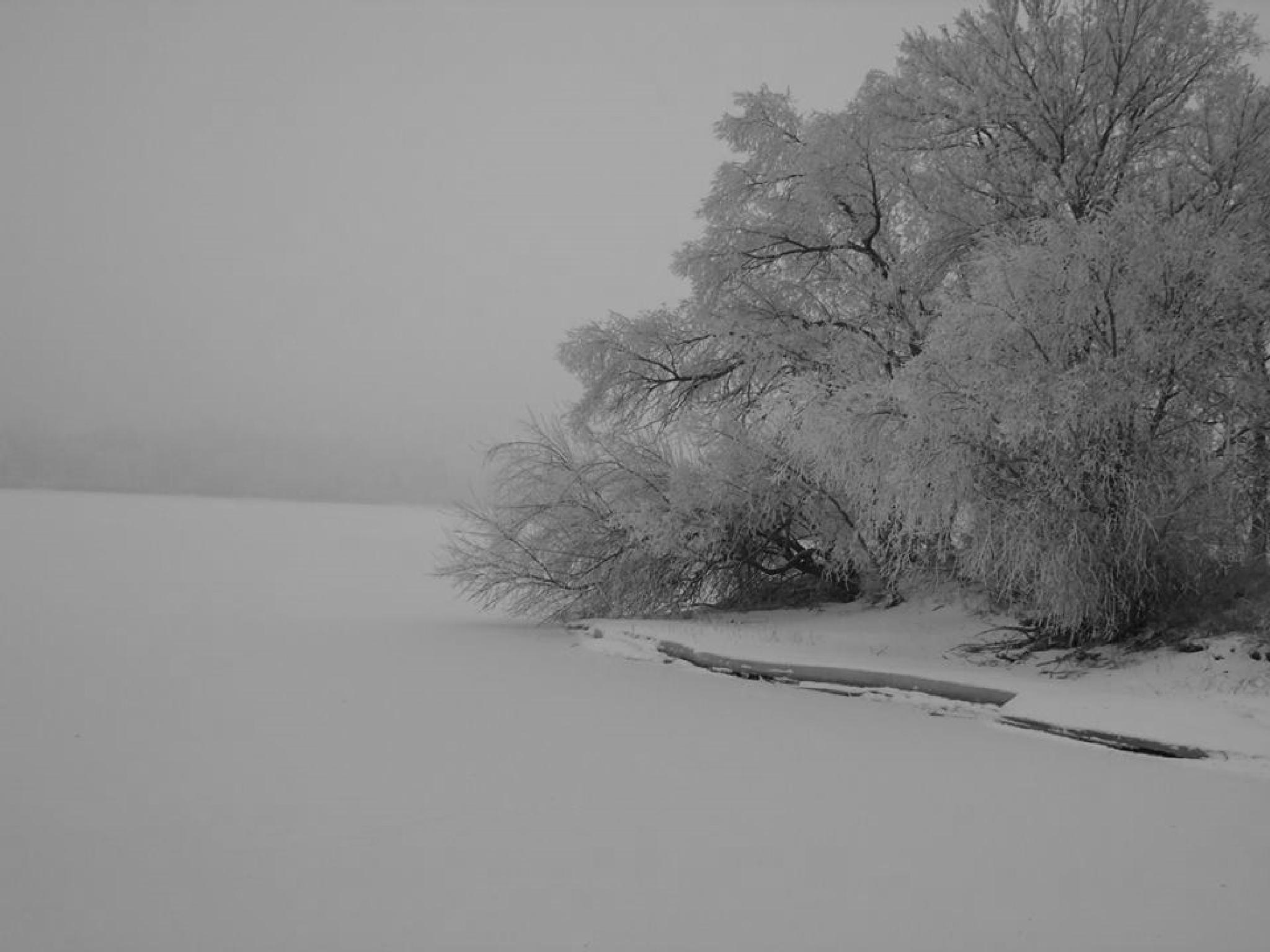 Frozen Lake in Black and White by sueherdt