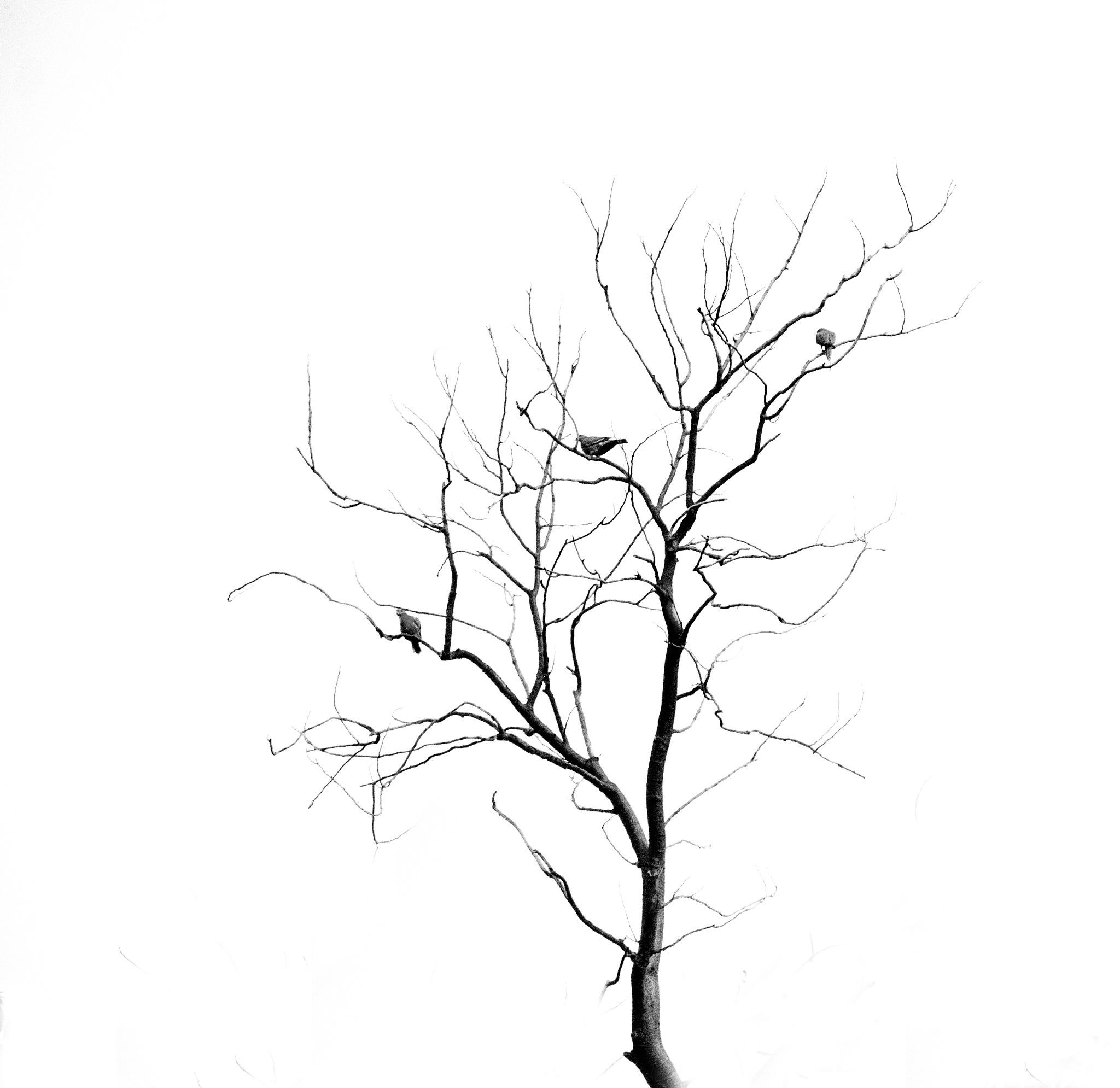 Tree and birds by marokkyprianou