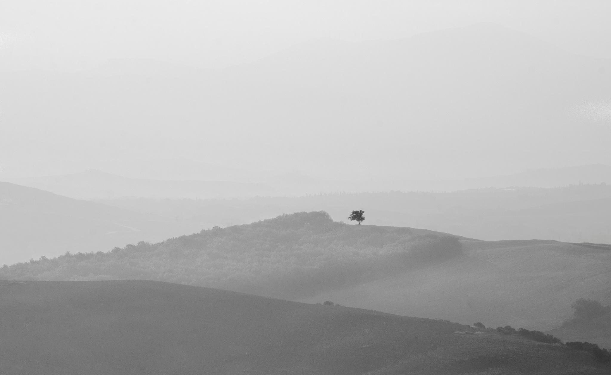The lonely tree by marokkyprianou
