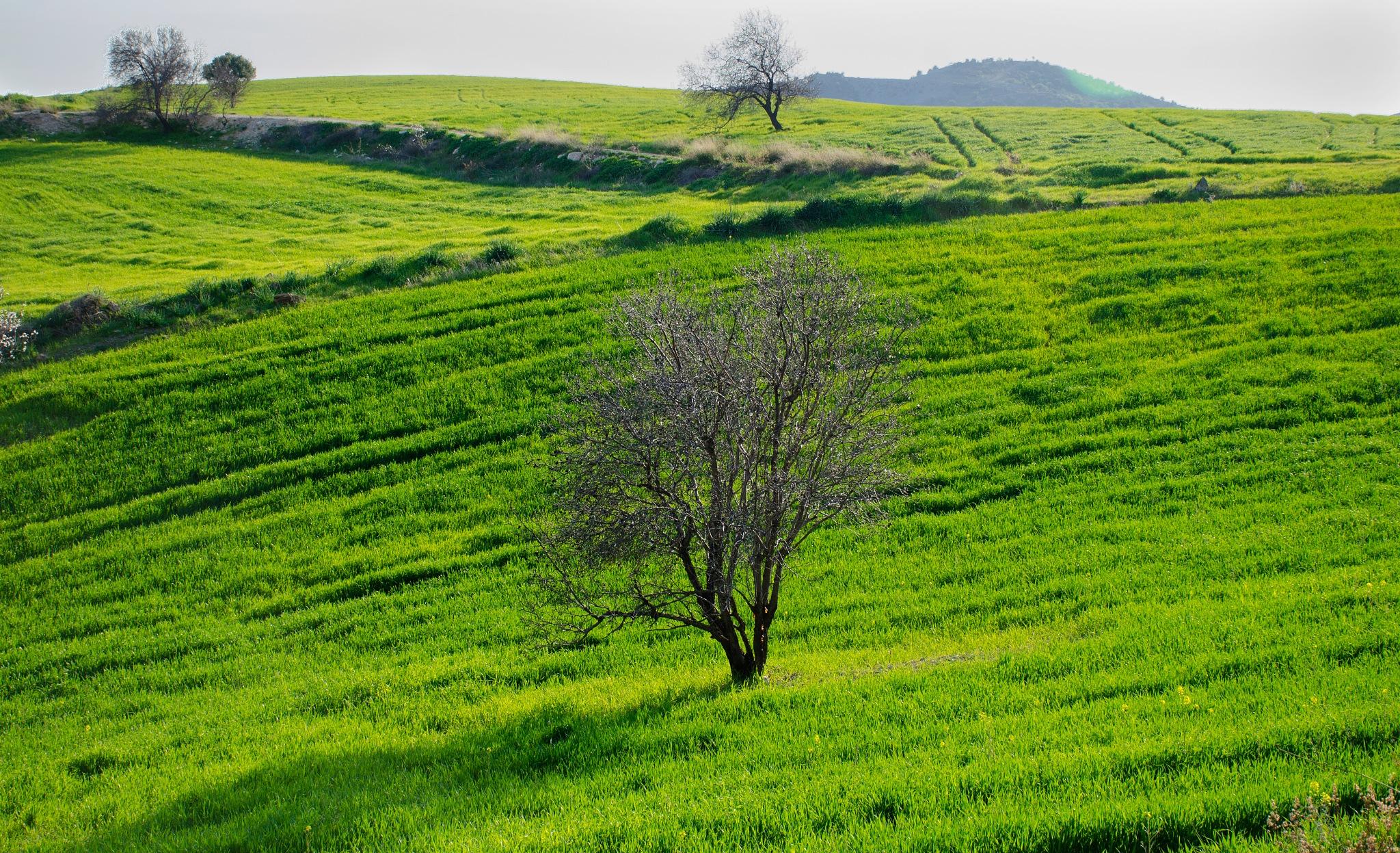 Lines in green by marokkyprianou