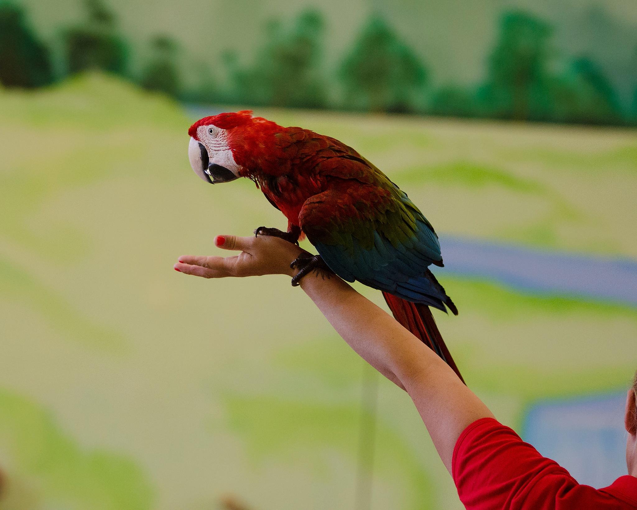 My sweet parrot  by marokkyprianou
