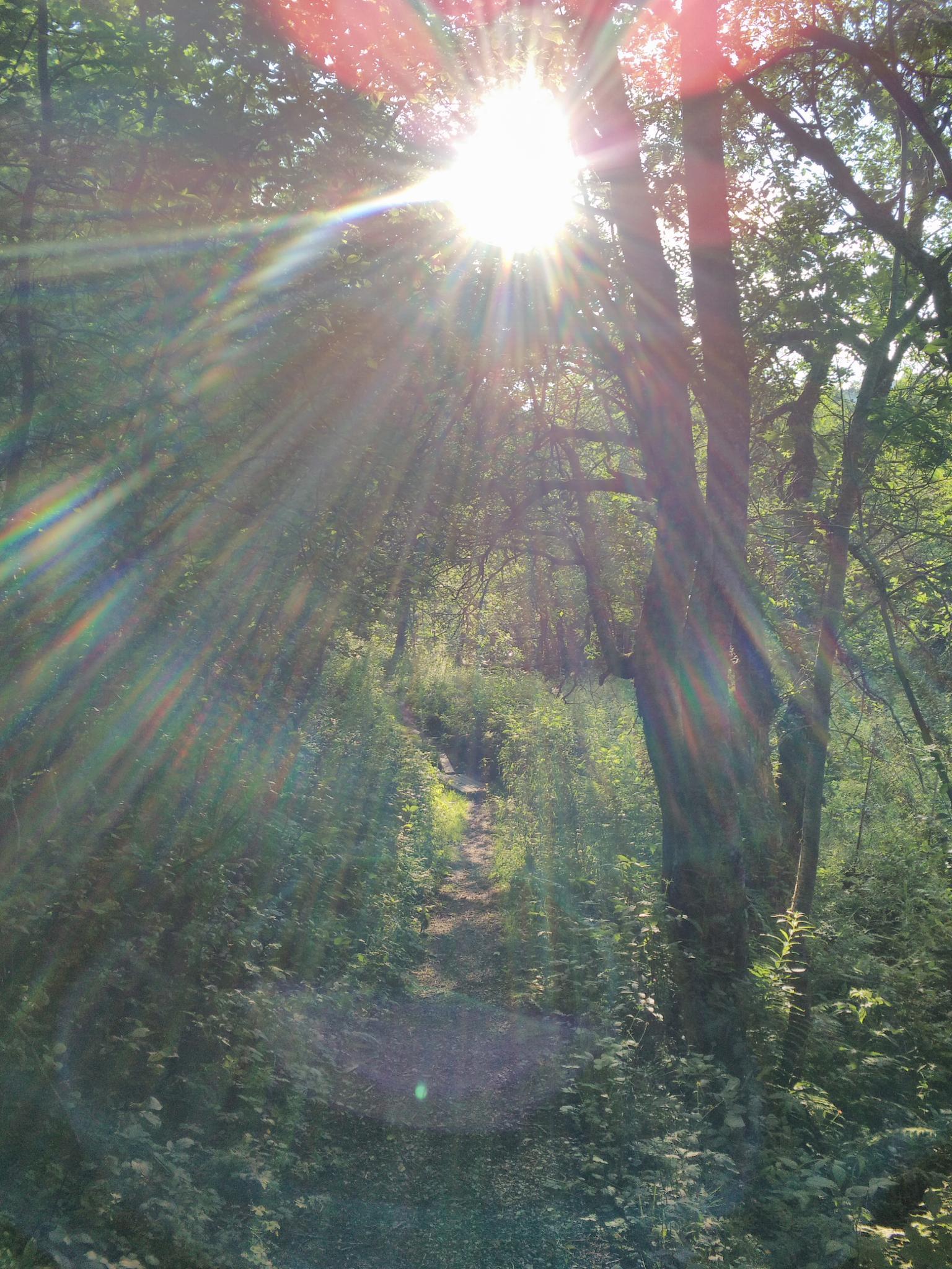 Sunlight by mdoleire
