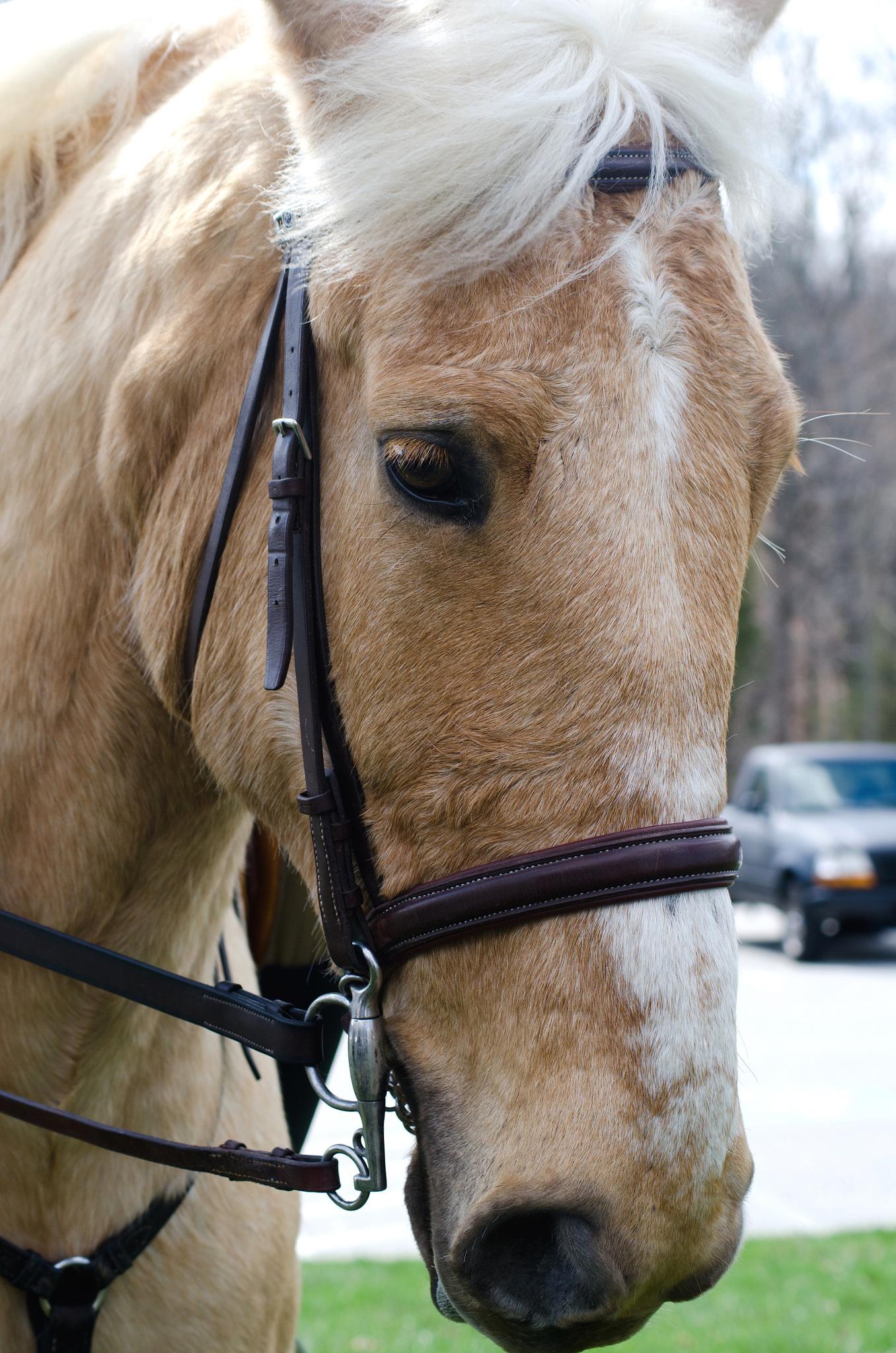 Horse by Deborah J. Moore