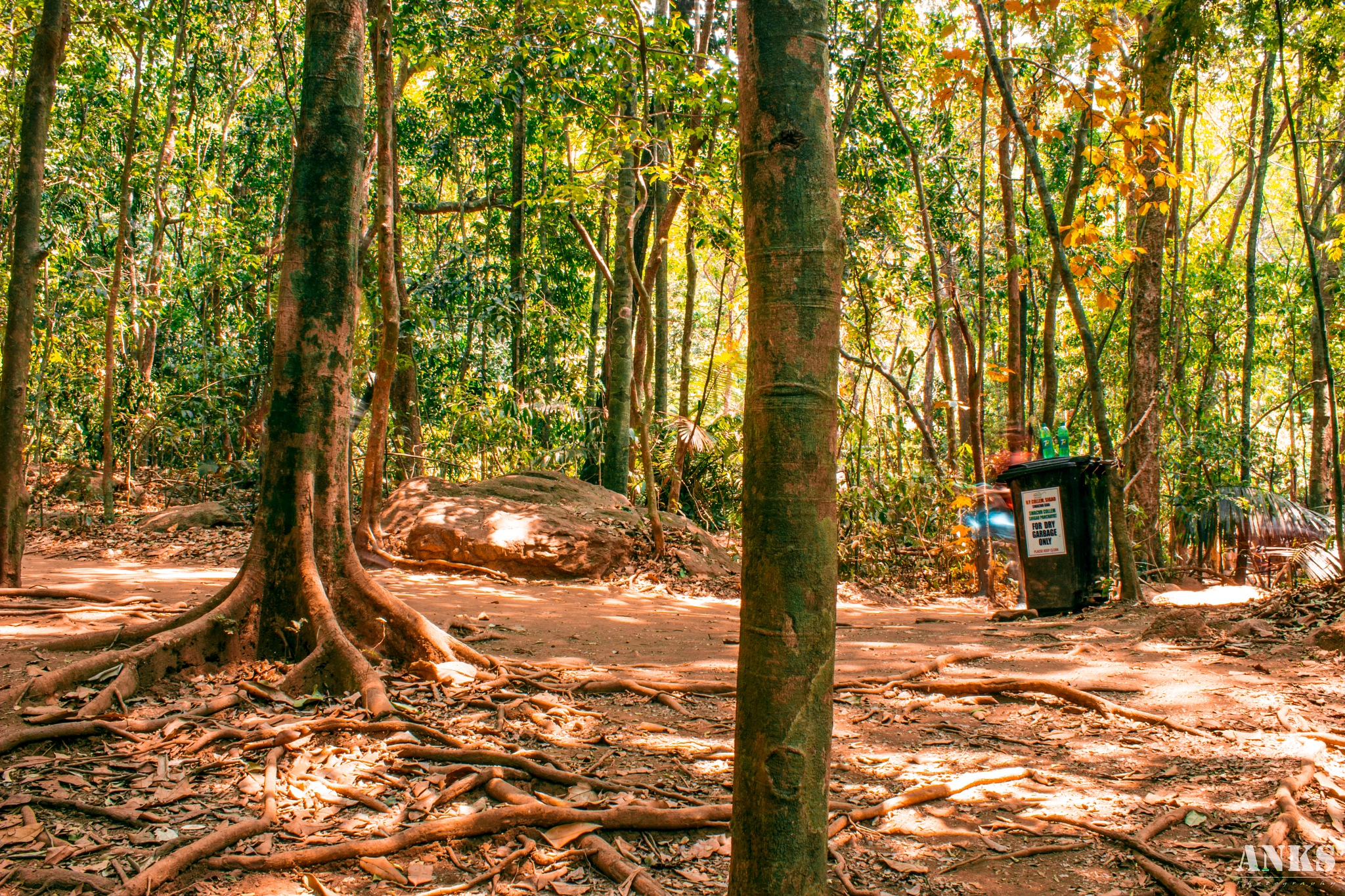 Goa Forest  by Anks Photography