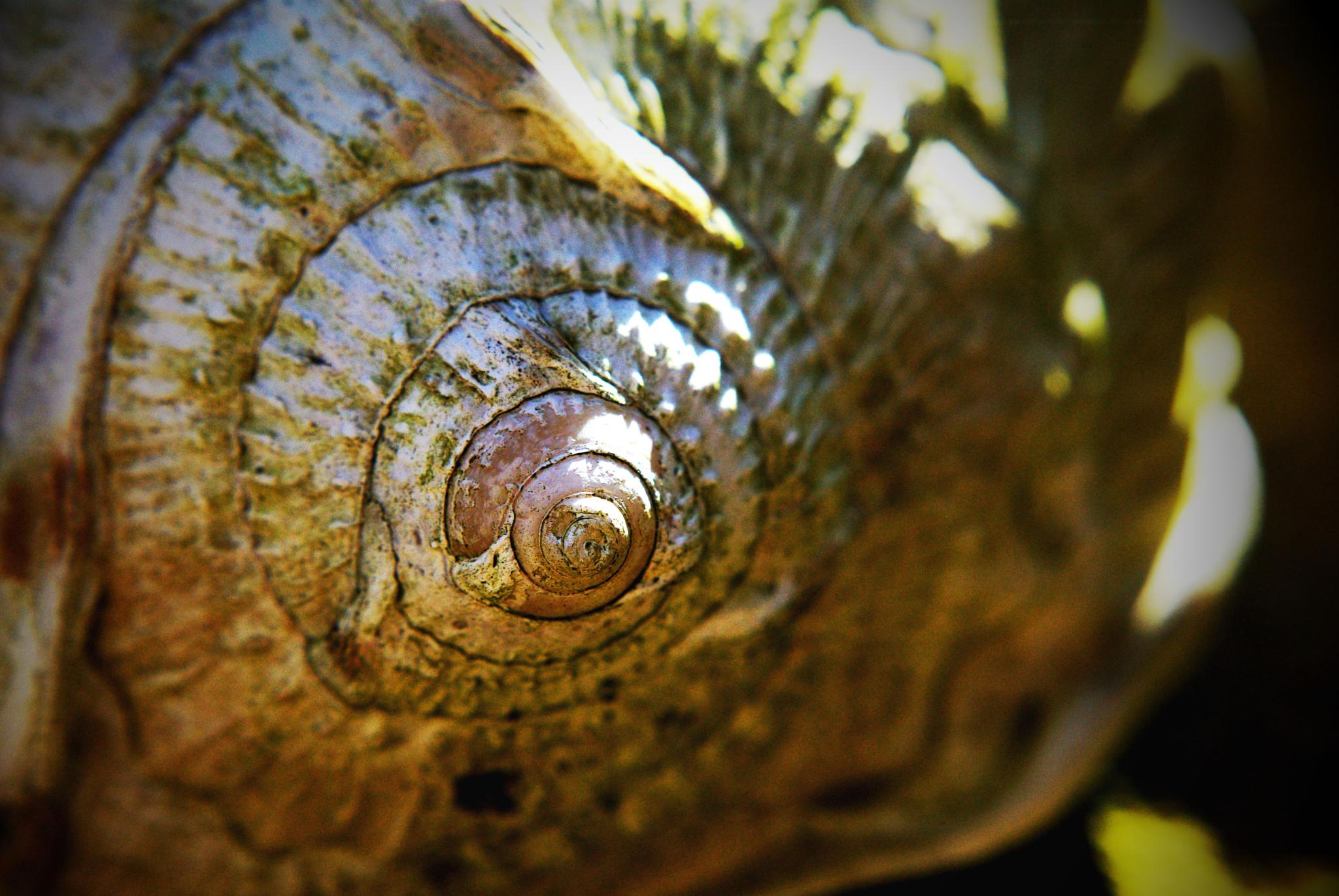 Garden Shell by Kelly-Ann Davies