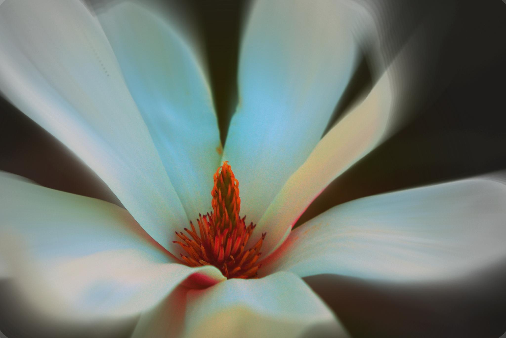 Flower Fade by Kelly-Ann Davies