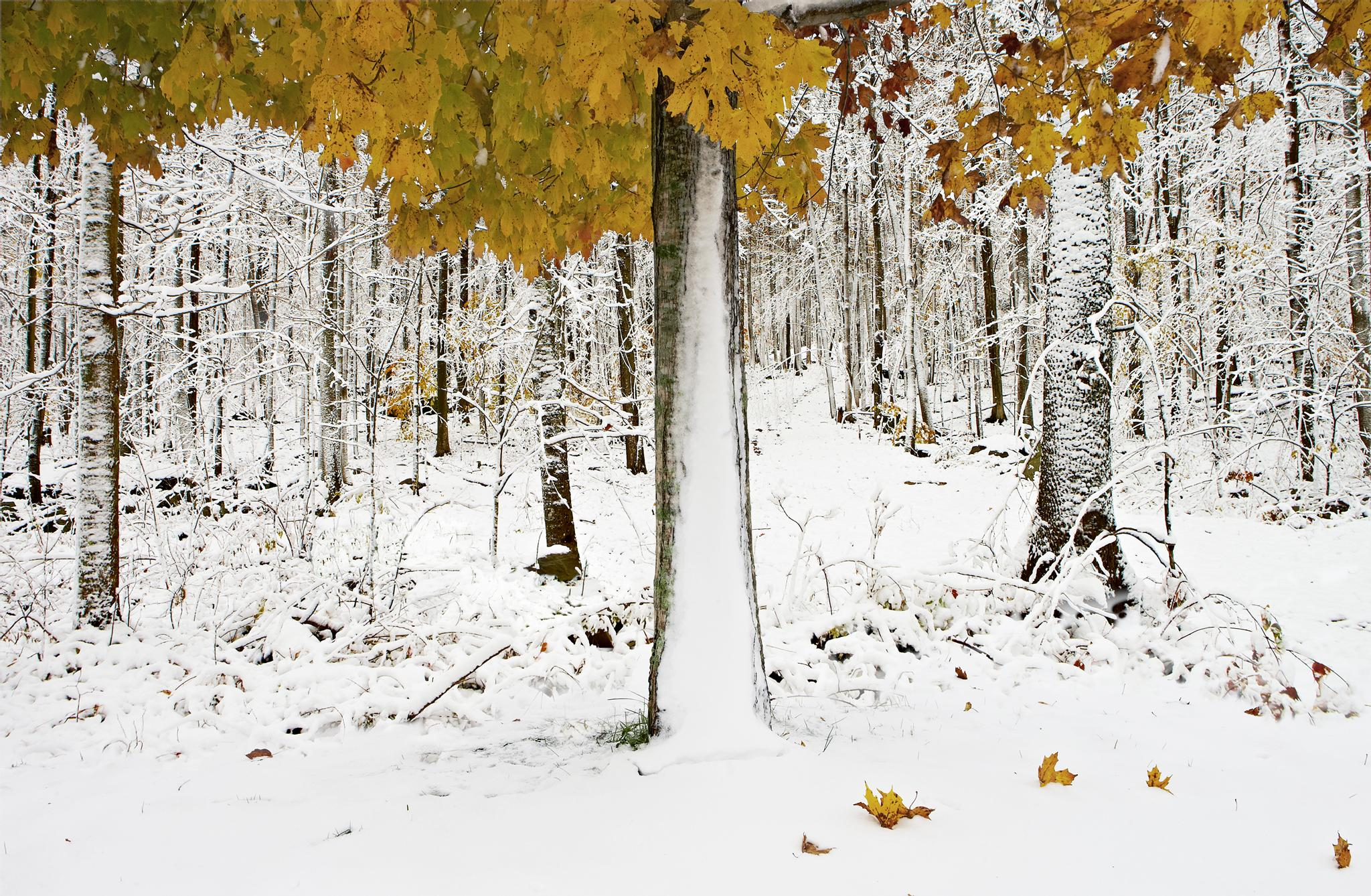 Early snow in the Berkshires by ChrisRyan
