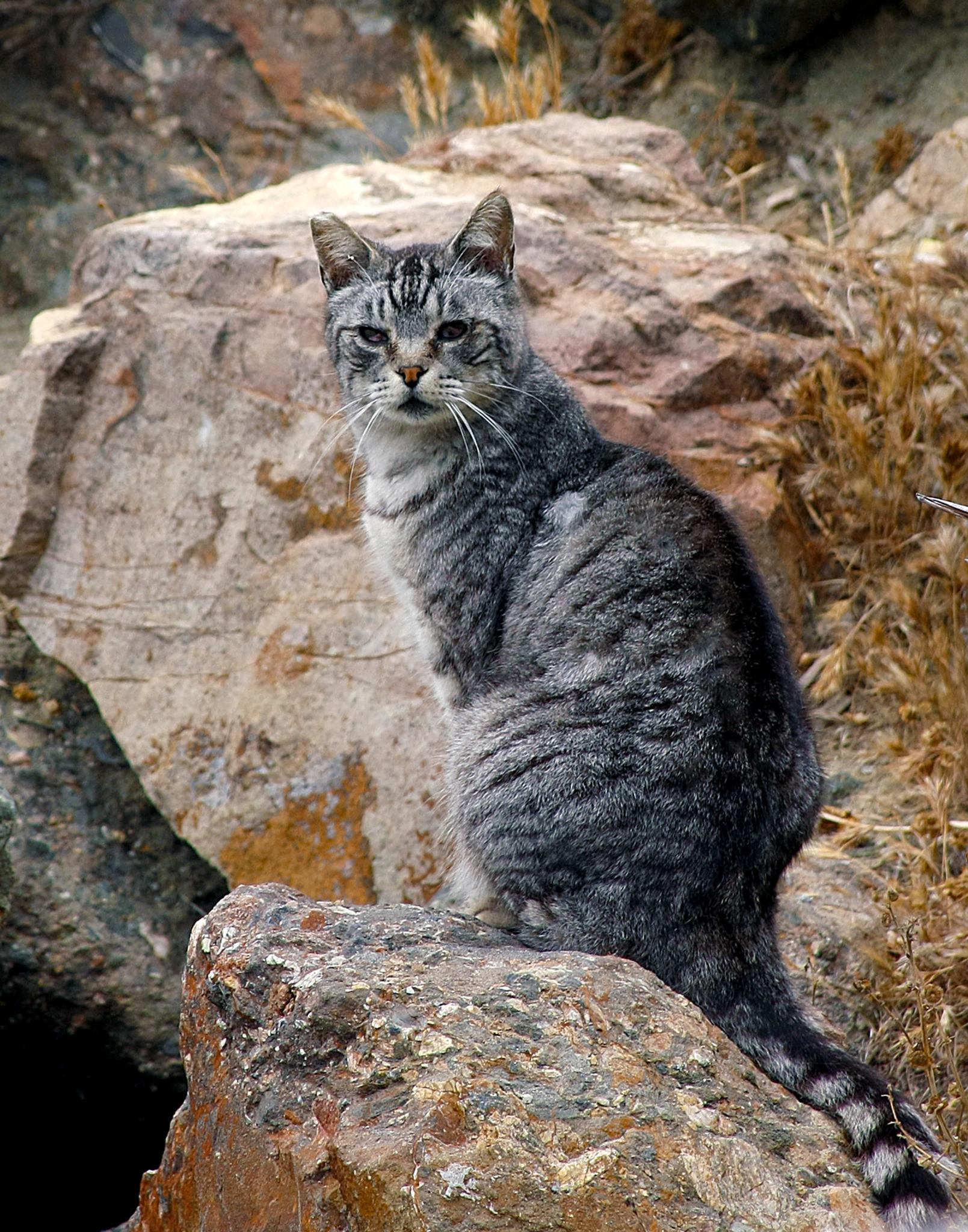 Feral cat by Matthew Robinson