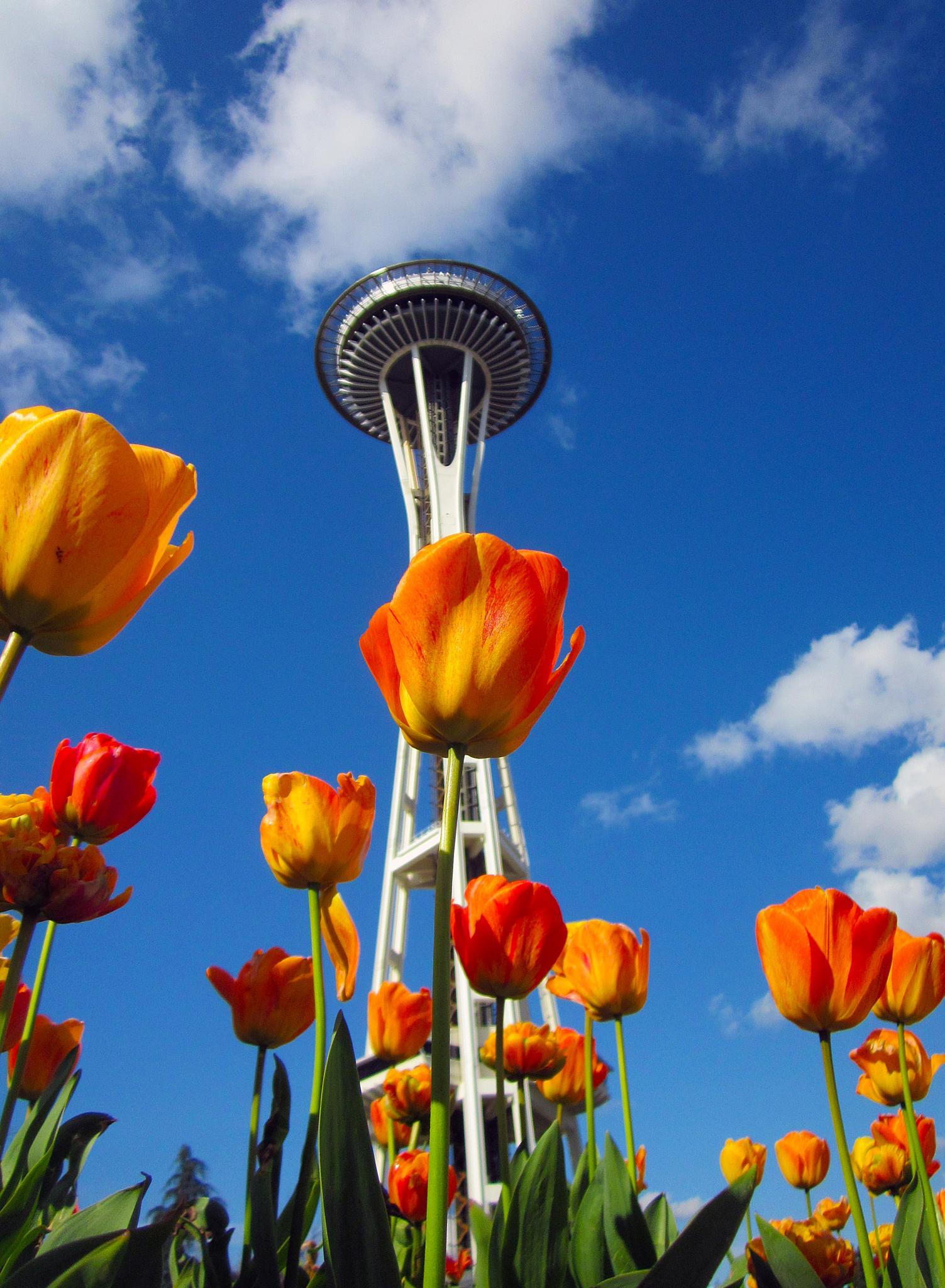 Seattle by Matthew Robinson