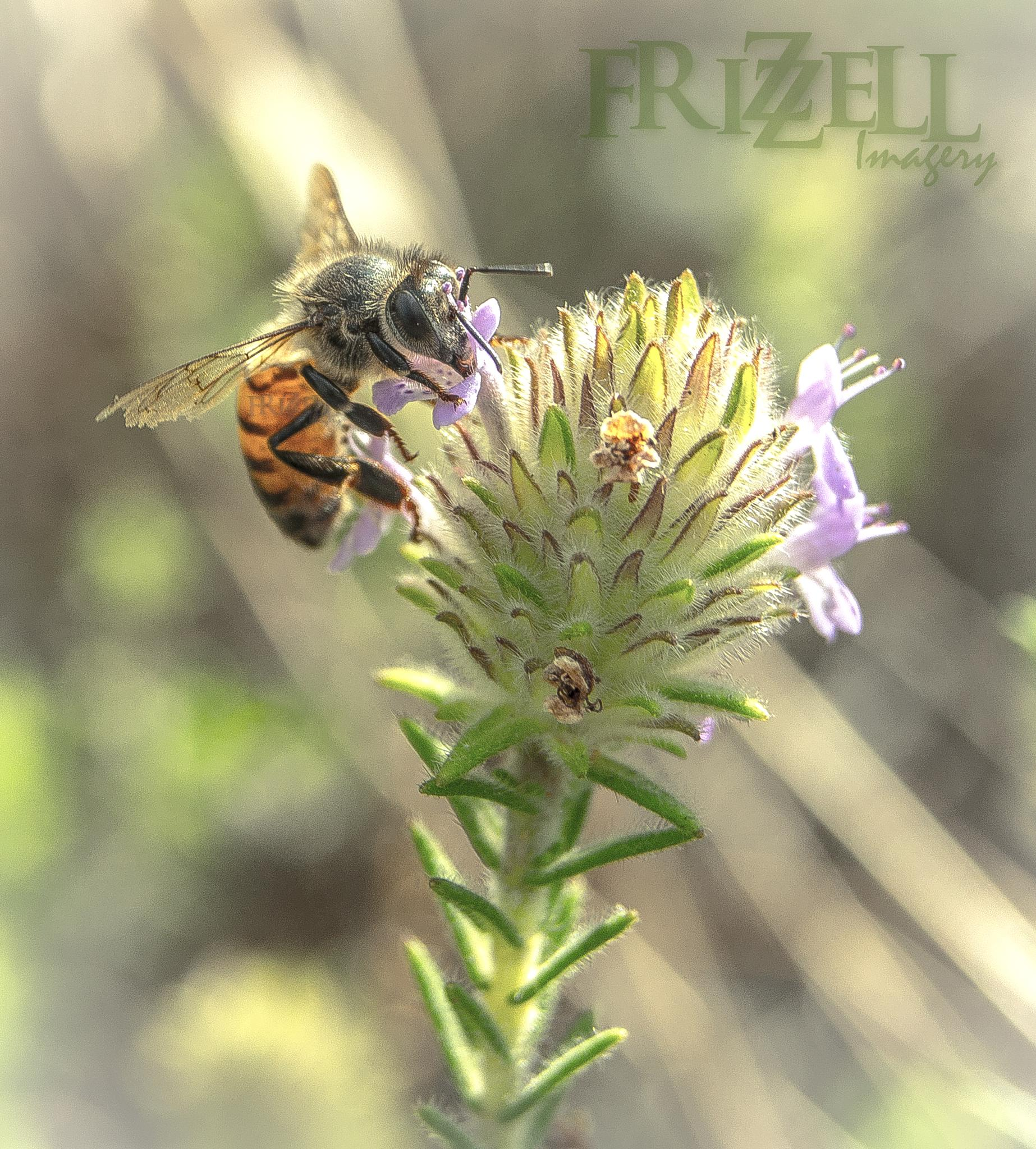Bee Collecting by Michael C Frizzell