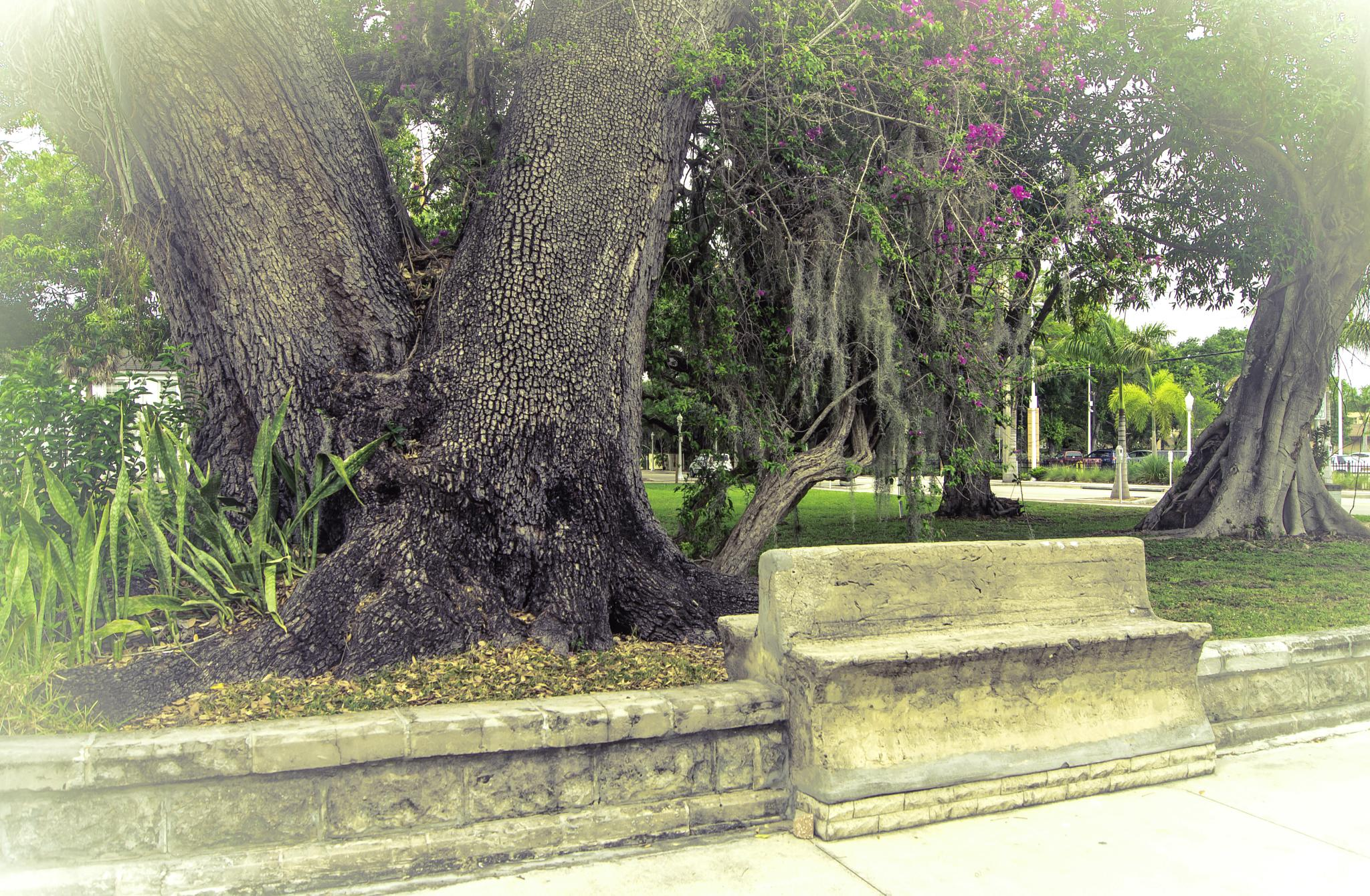 Downtown Bench by Michael C Frizzell