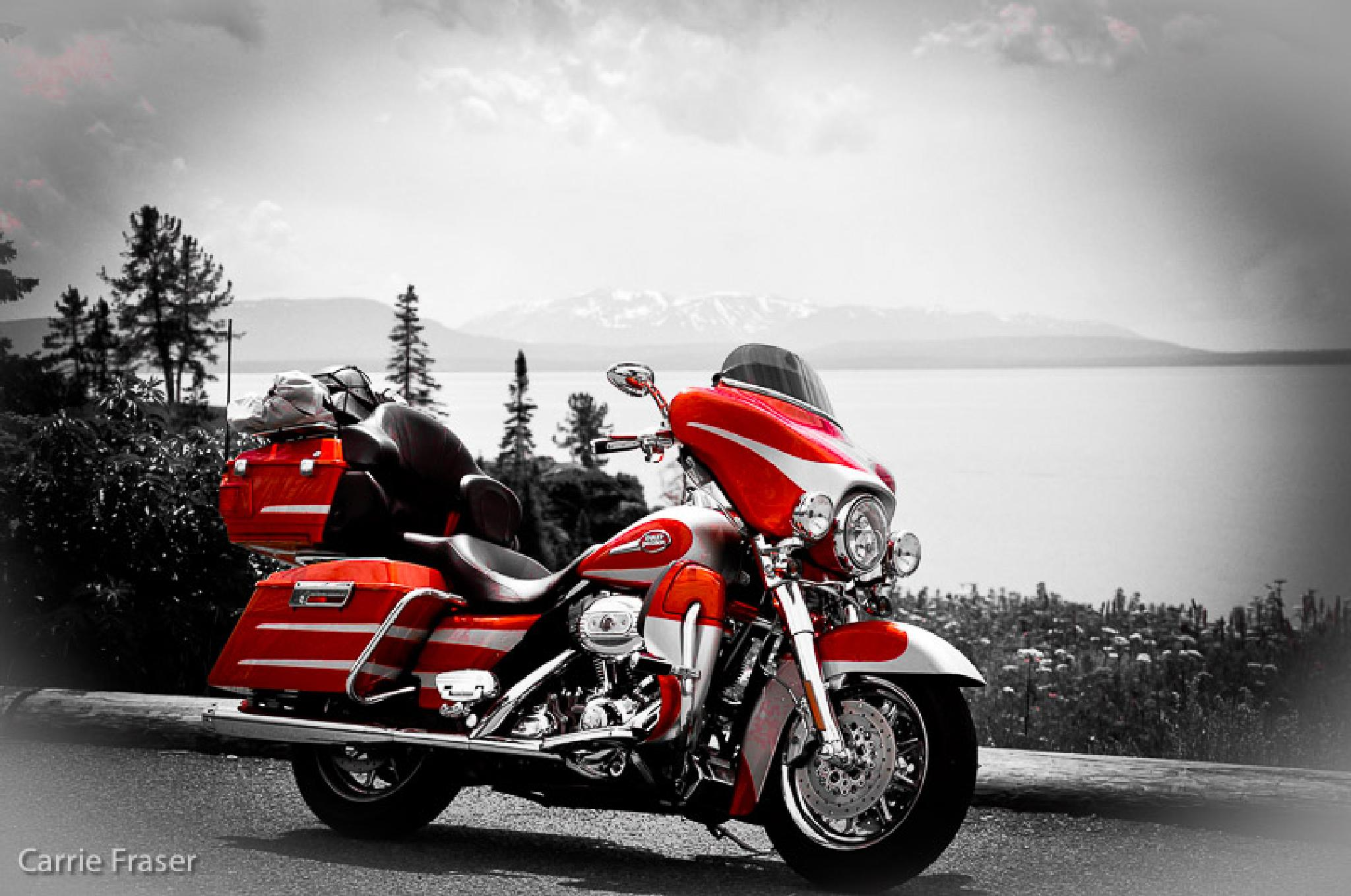 CVO shine in Yellowstone by Carrie Fraser