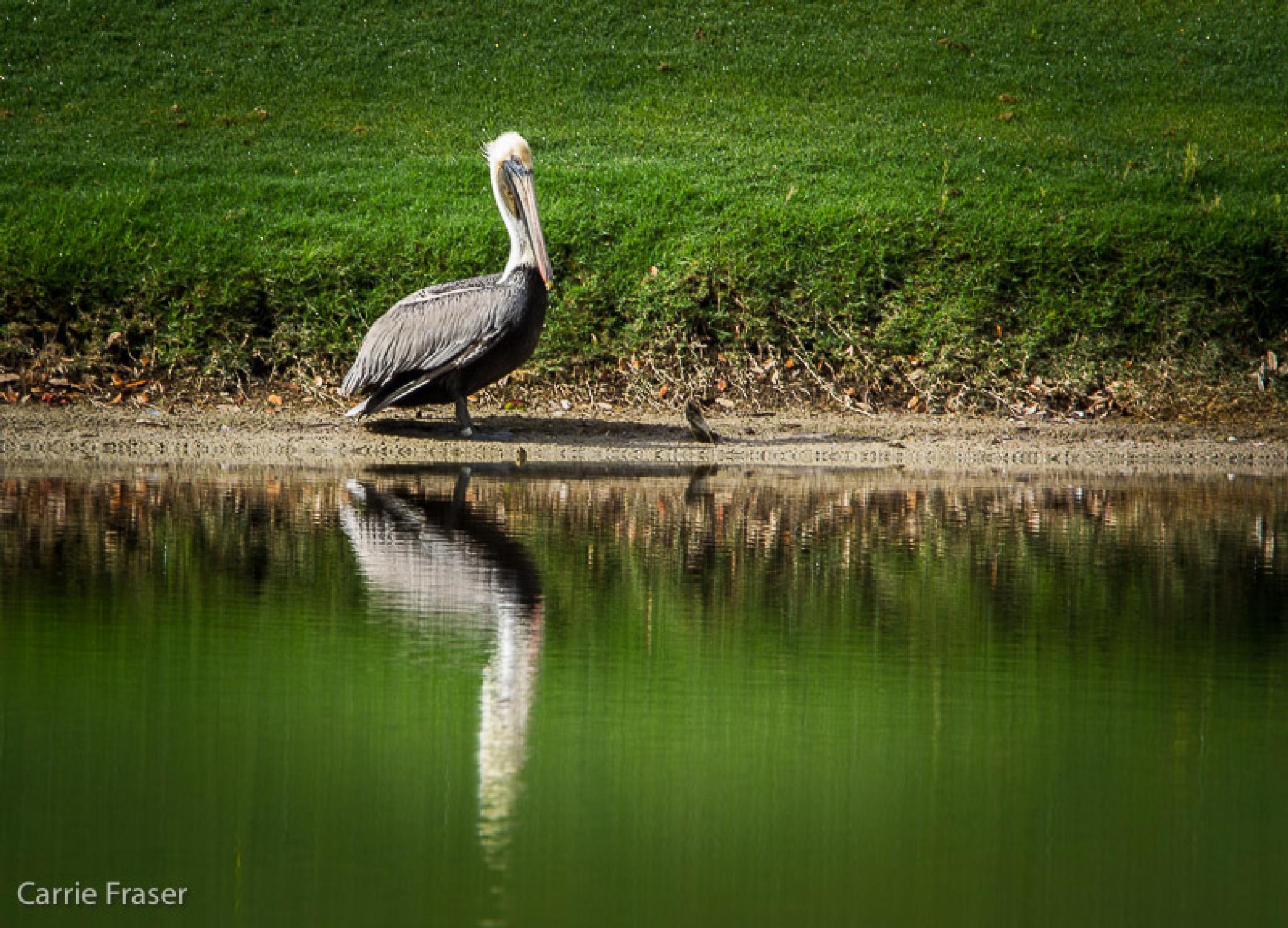 Photo in Nature #nature #wildlife #birds #florida