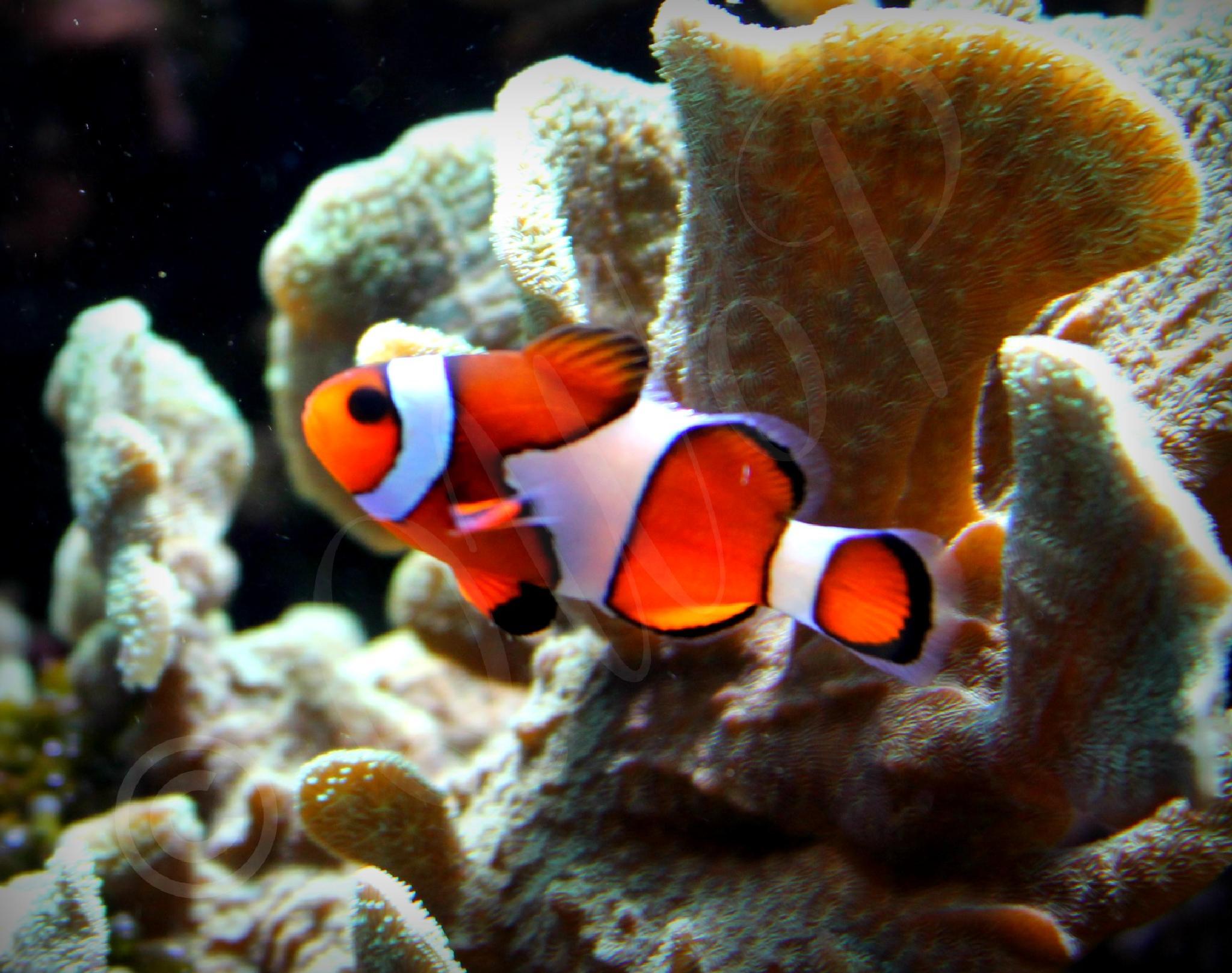 Nemo by Casey-Jaie Thomas