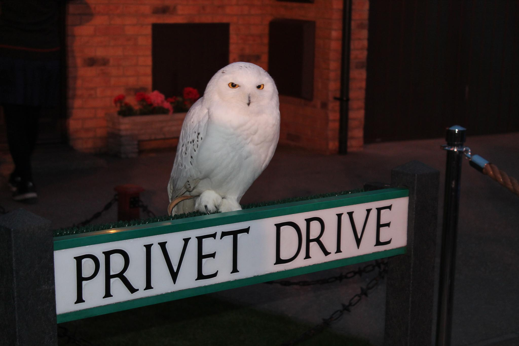 Photo in Random #amateur #harrypotter #potterfan #owl