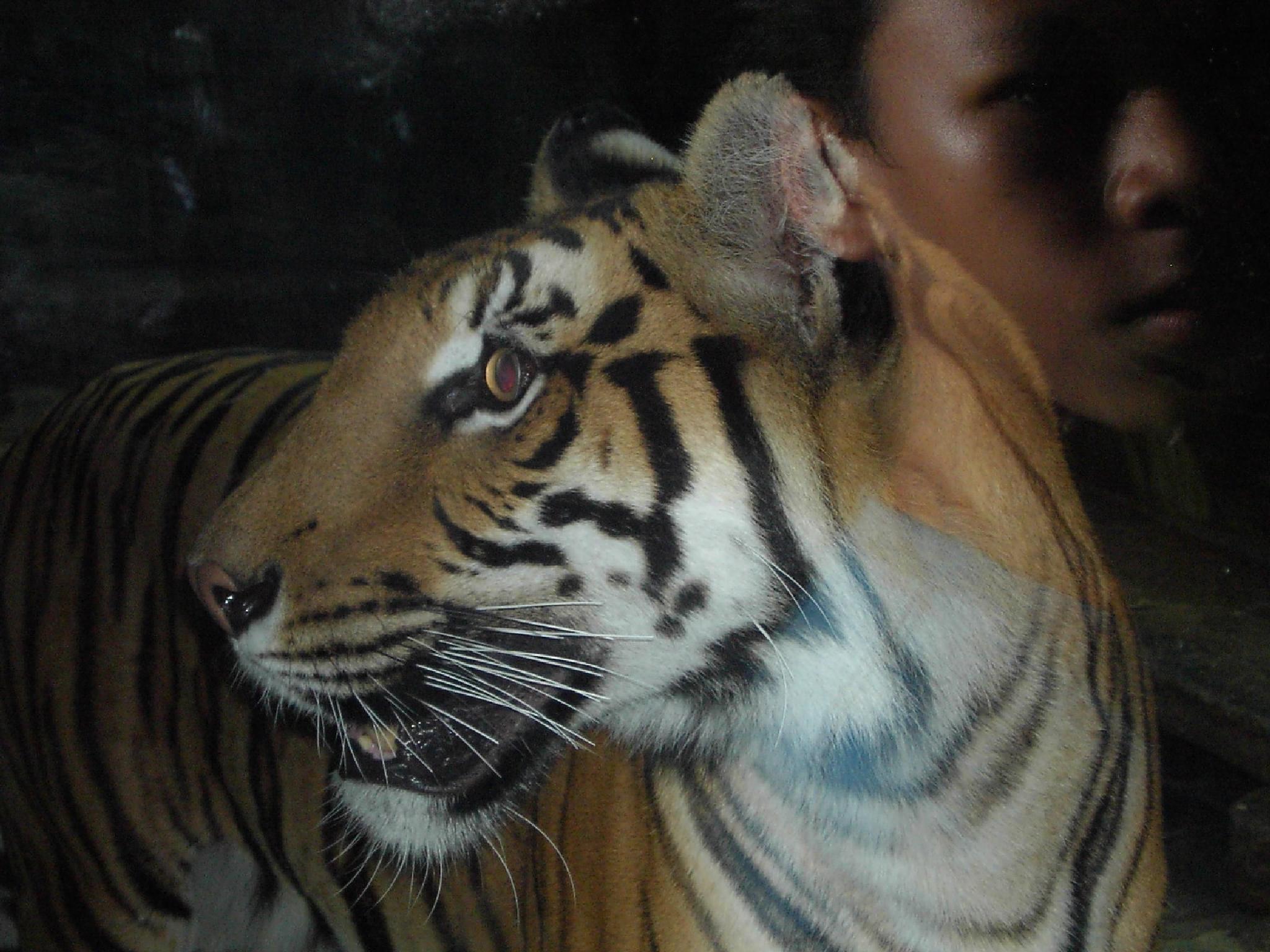 Eye of the tiger by MissXavierBurgess