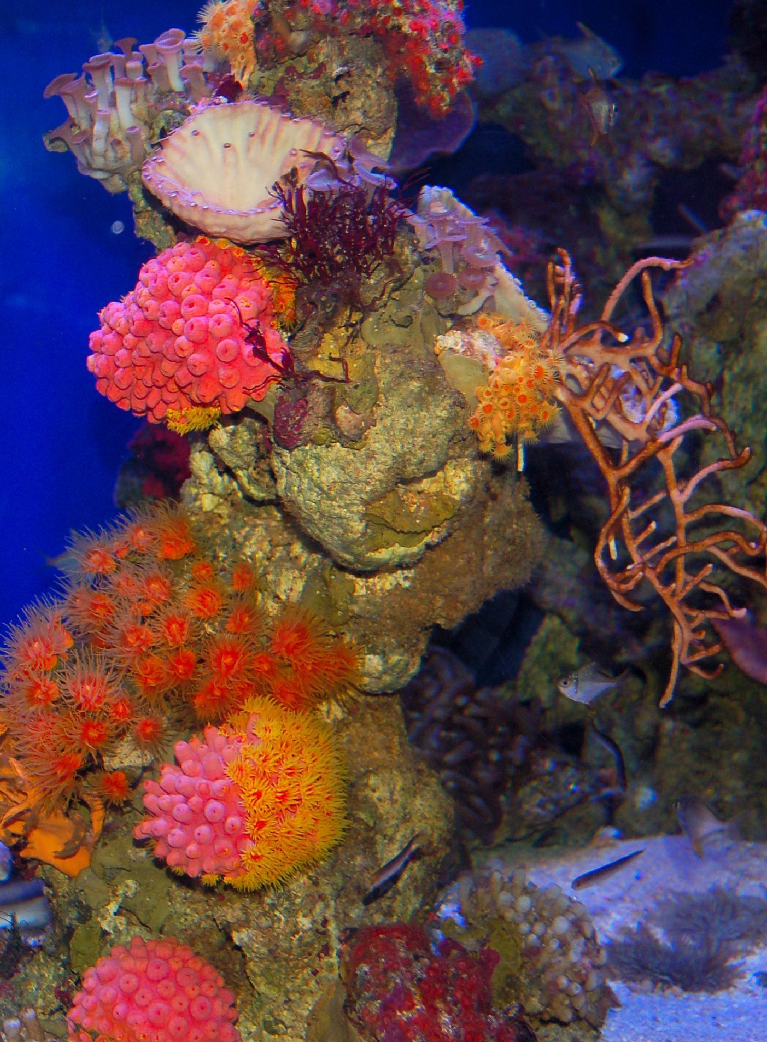 Beautiful Coral by Zoid359WA