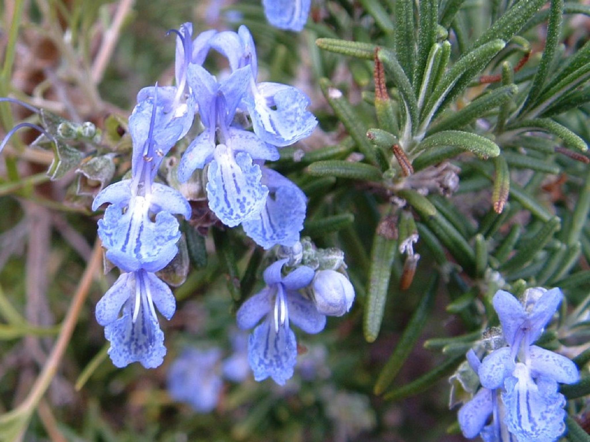 Calming Purple flower by Zoid359WA