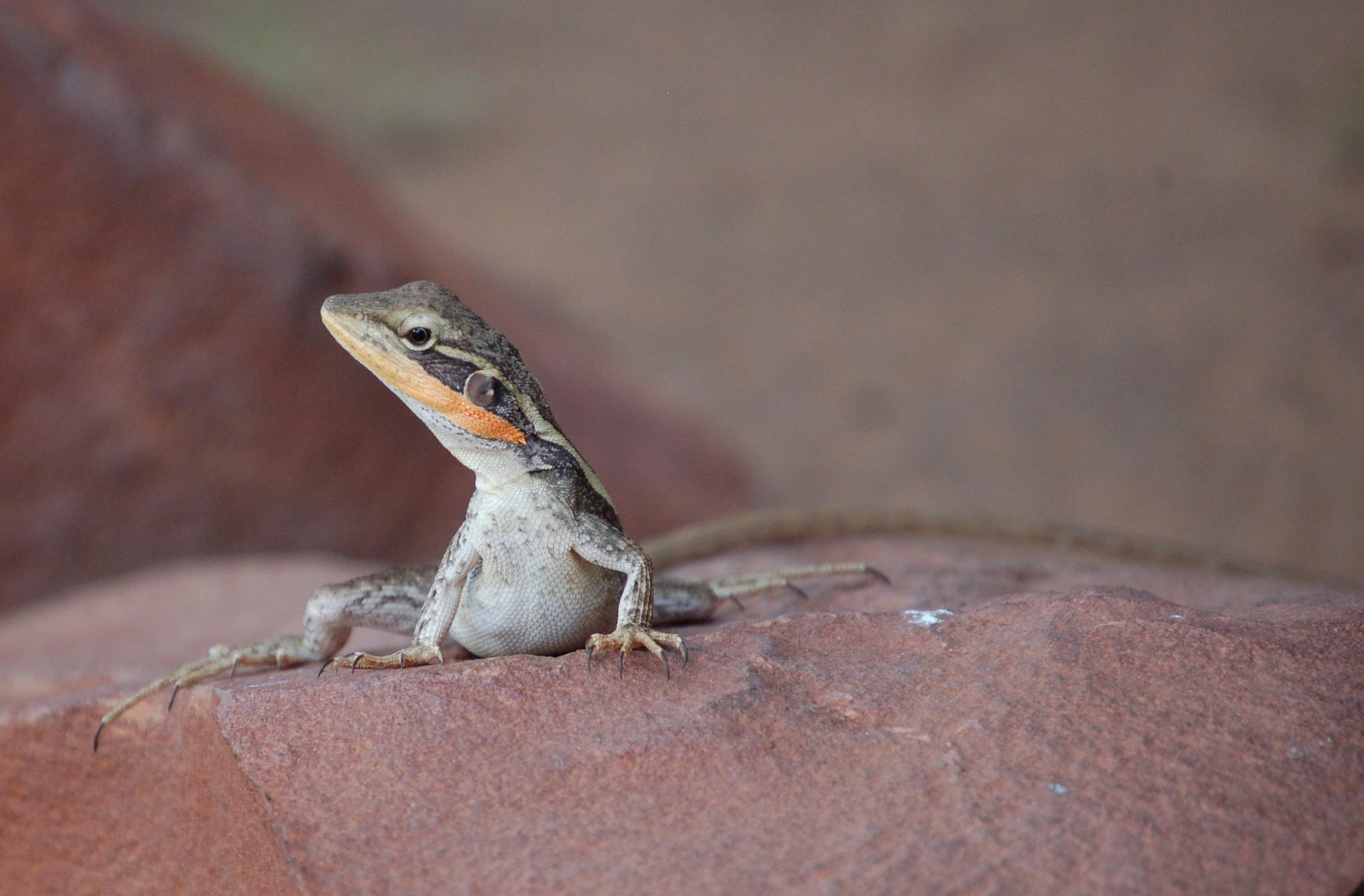 Lizard by Zoid359WA