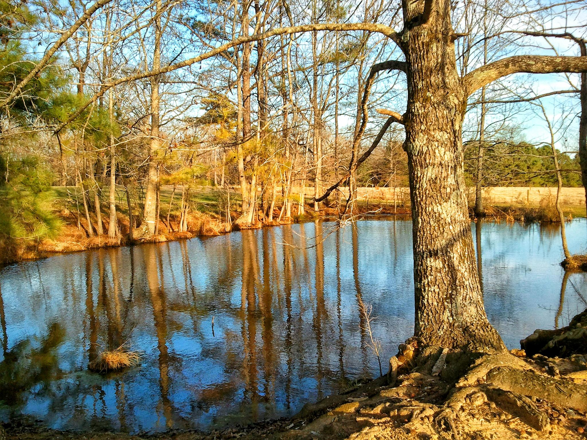 Reflections on the pond by aimorgan