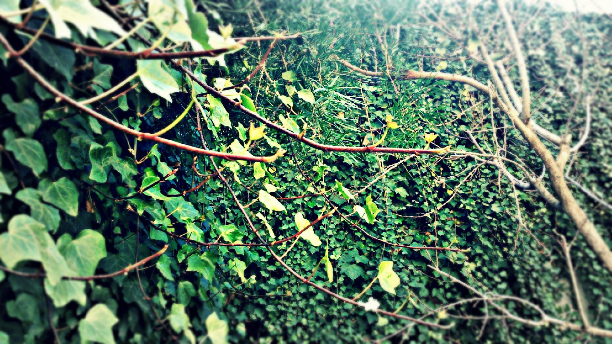 Green  by MoncefToumi2