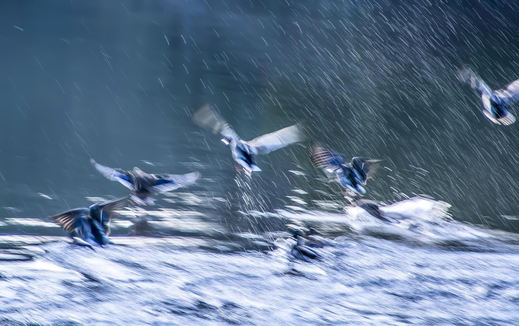 Photo in Abstract #abstract ducks water pond lake #rspb wildlife birds waterfowl