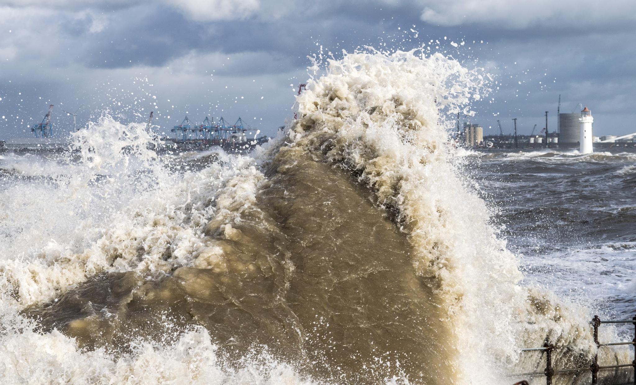 Sea Monster  by ILoveThatPhoto.co.uk