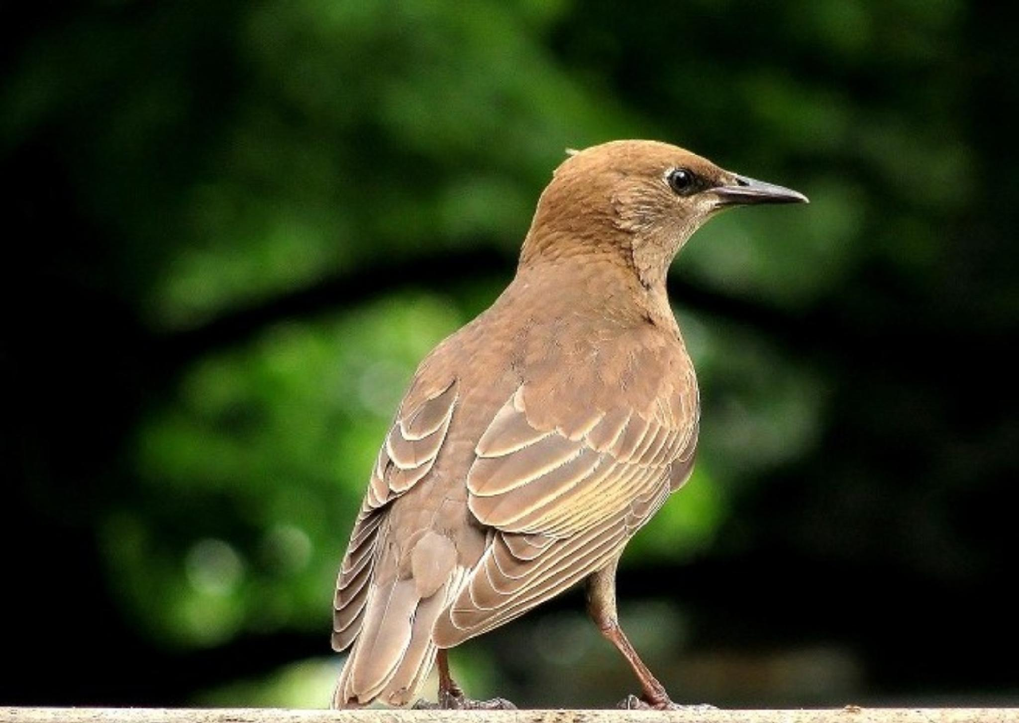 bird by JudyKolka
