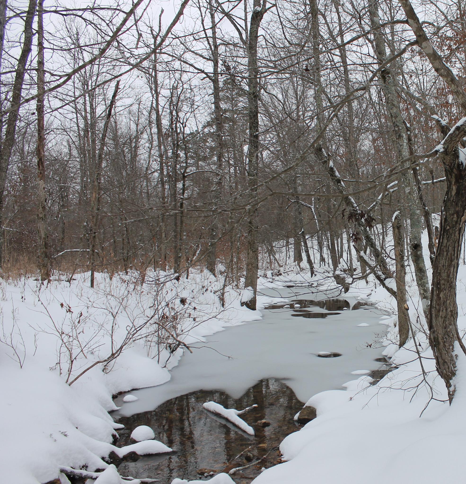 March snow by kristal.dewitt1
