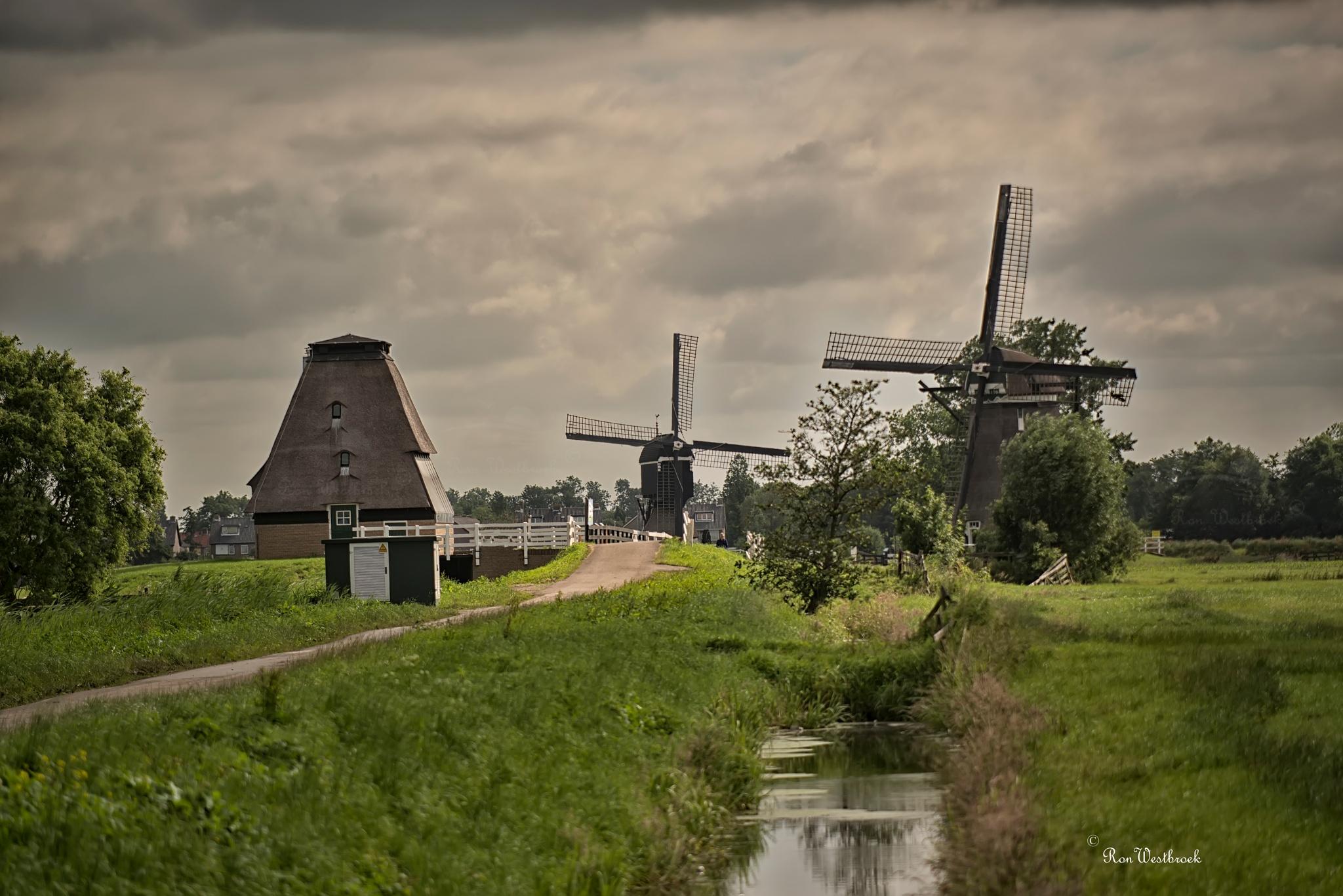 Dutch. by Ron Westbroek