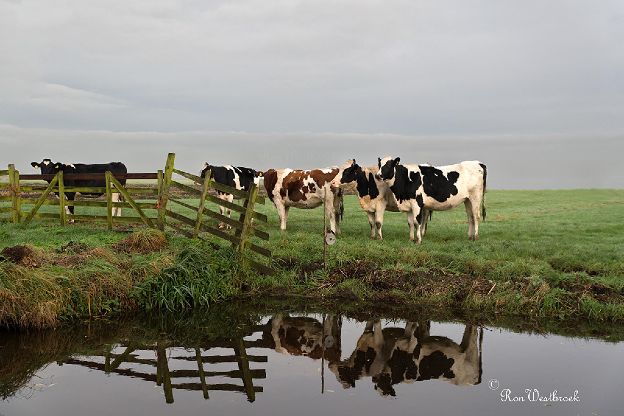 Pure Dutch  by Ron Westbroek