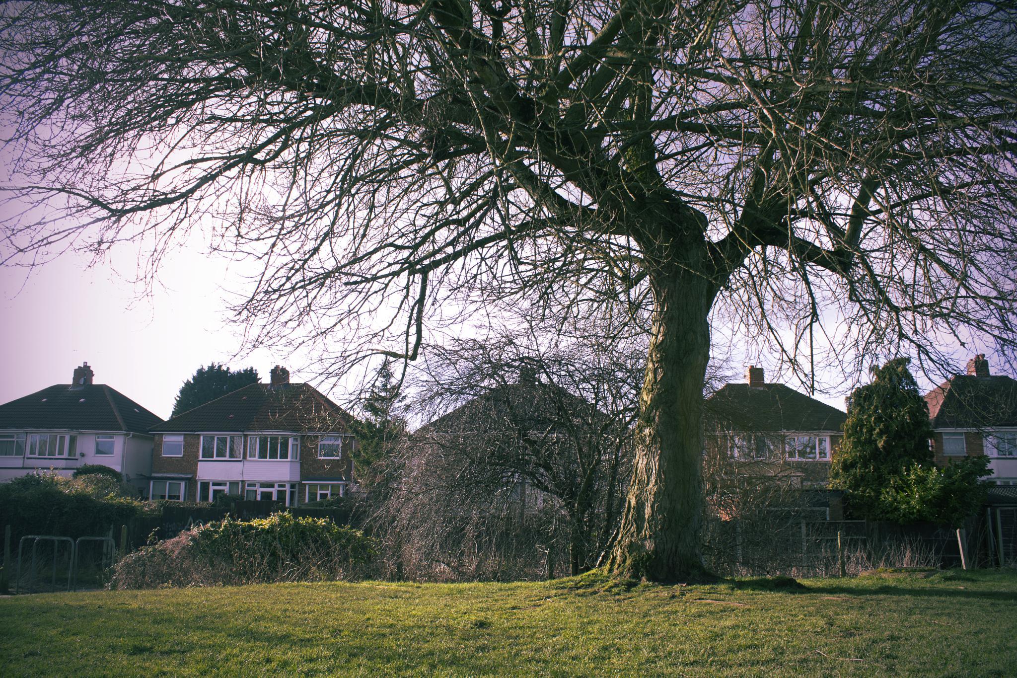 Winter Tree by Mesmerize